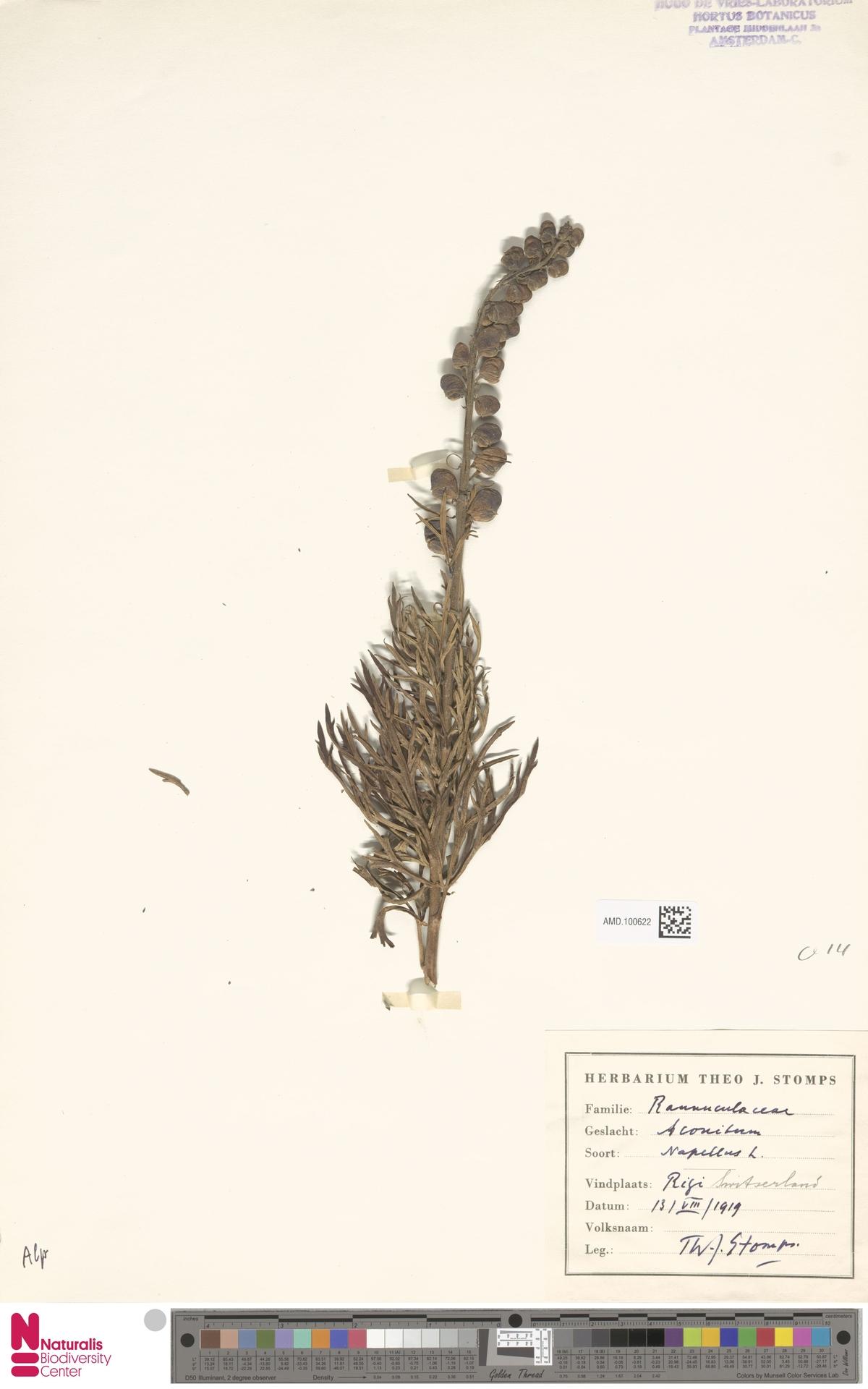 AMD.100622 | Aconitum napellus L.
