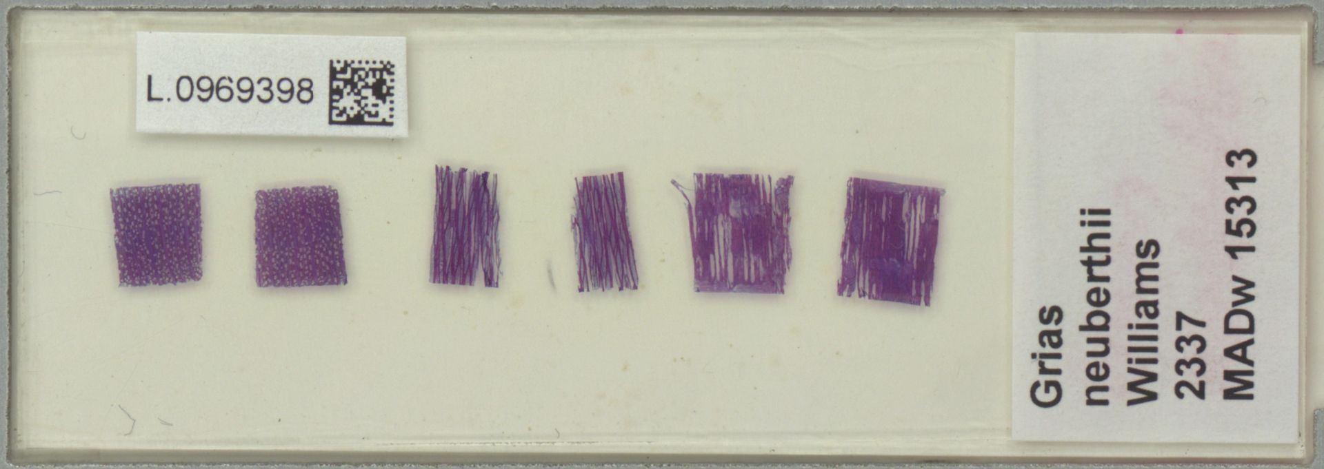 L.0969398 | Grias neuberthii J.F.Macbr.