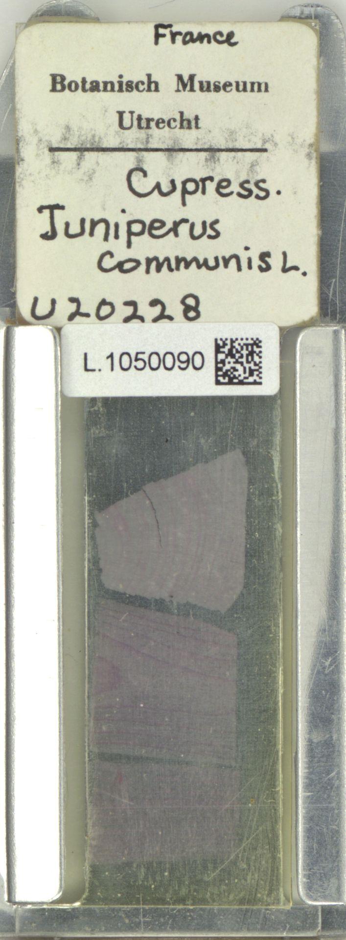L.1050090 | Juniperus communis L.