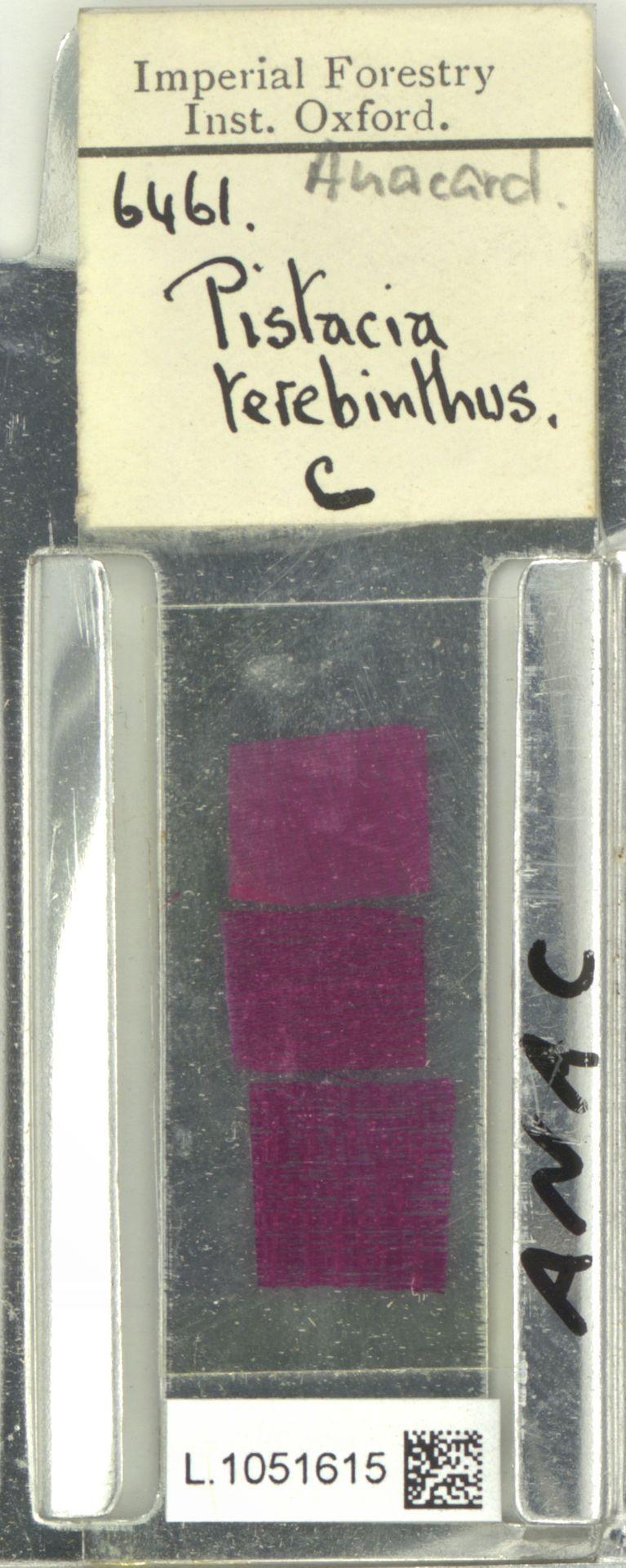 L.1051615 | Pistacia terebinthus L.