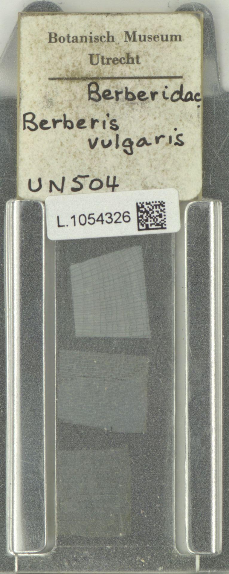 L.1054326   Berberis vulgaris L.