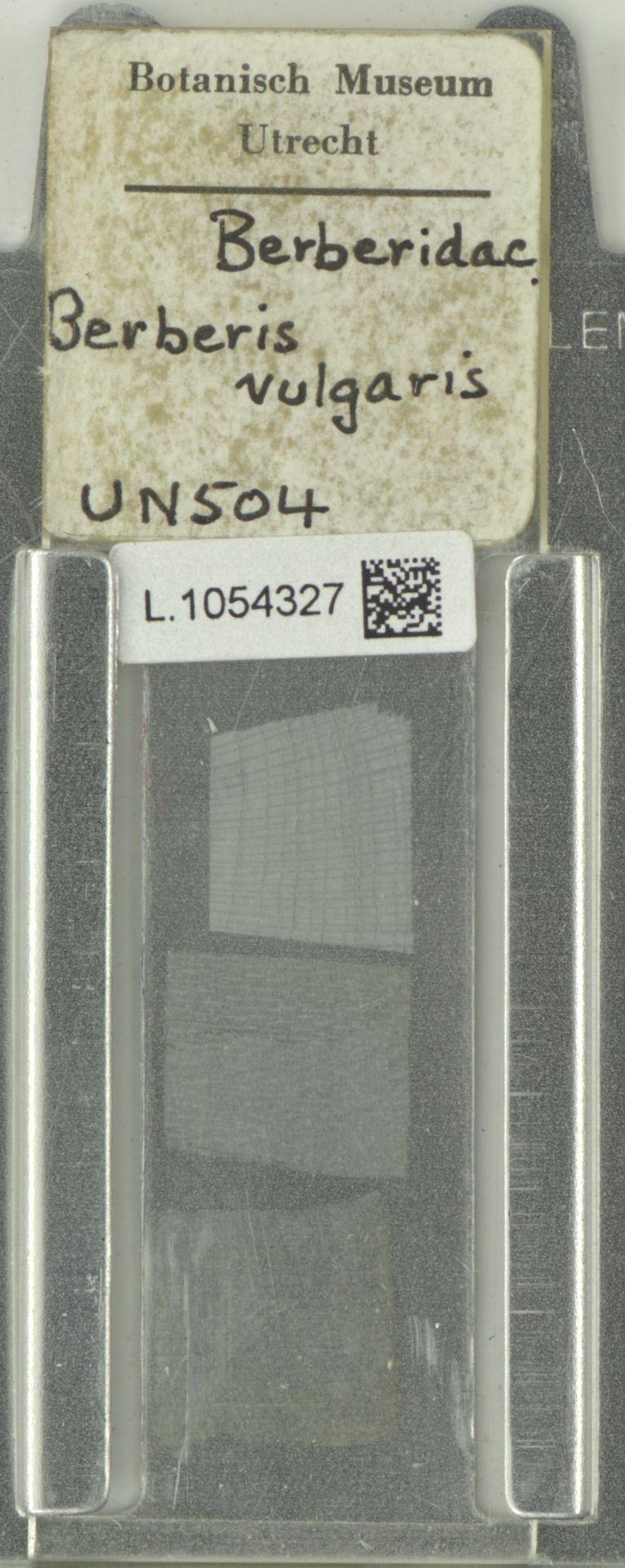 L.1054327 | Berberis vulgaris L.