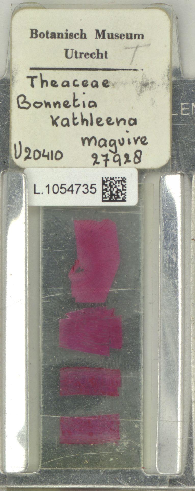 L.1054735 | Bonnetia kathleenae Lasser