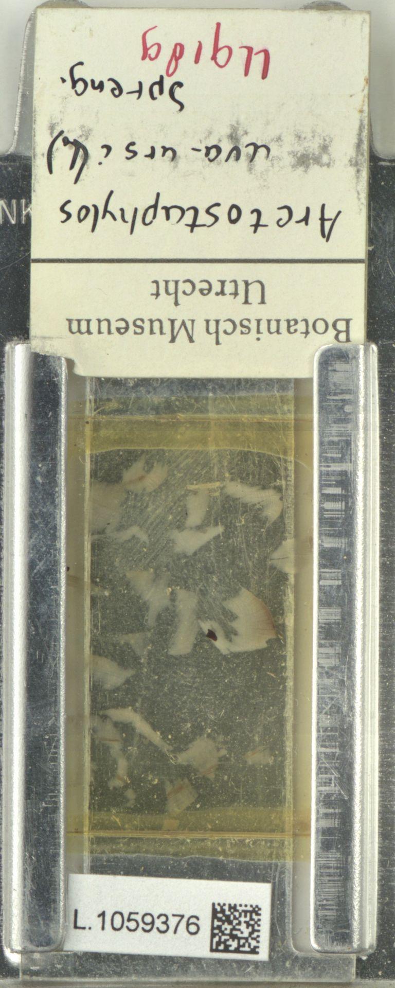 L.1059376 | Arctostaphylos uva-ursi (L.) Spreng.