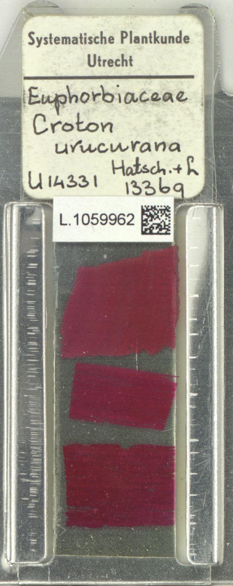 L.1059962 | Croton urucurana Baill.