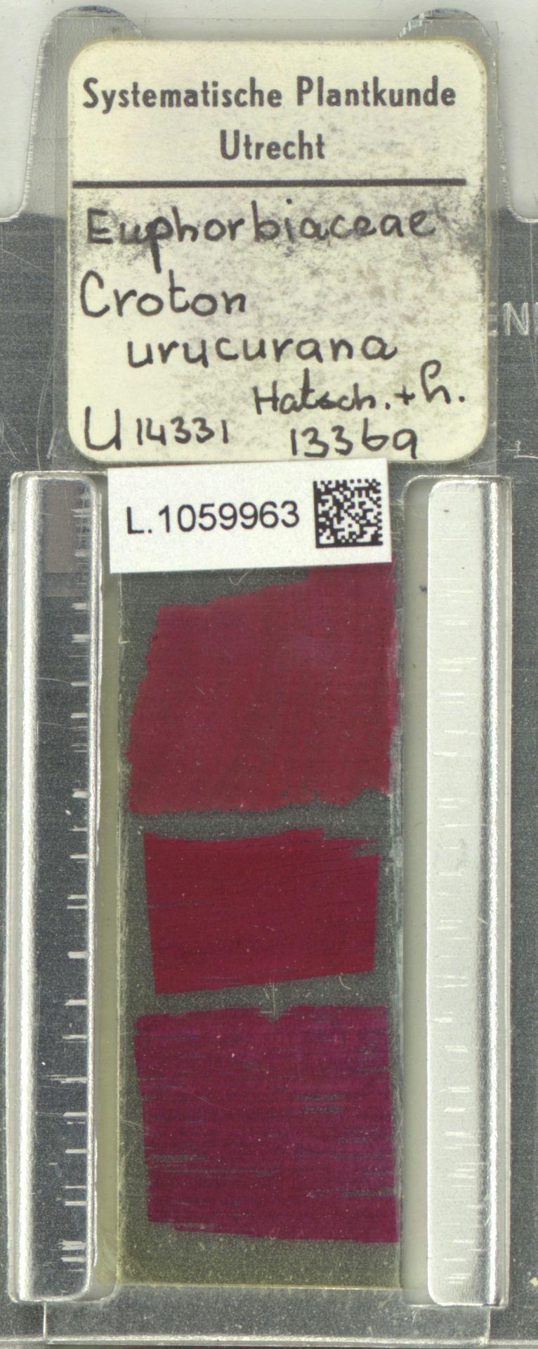 L.1059963 | Croton urucurana Baill.
