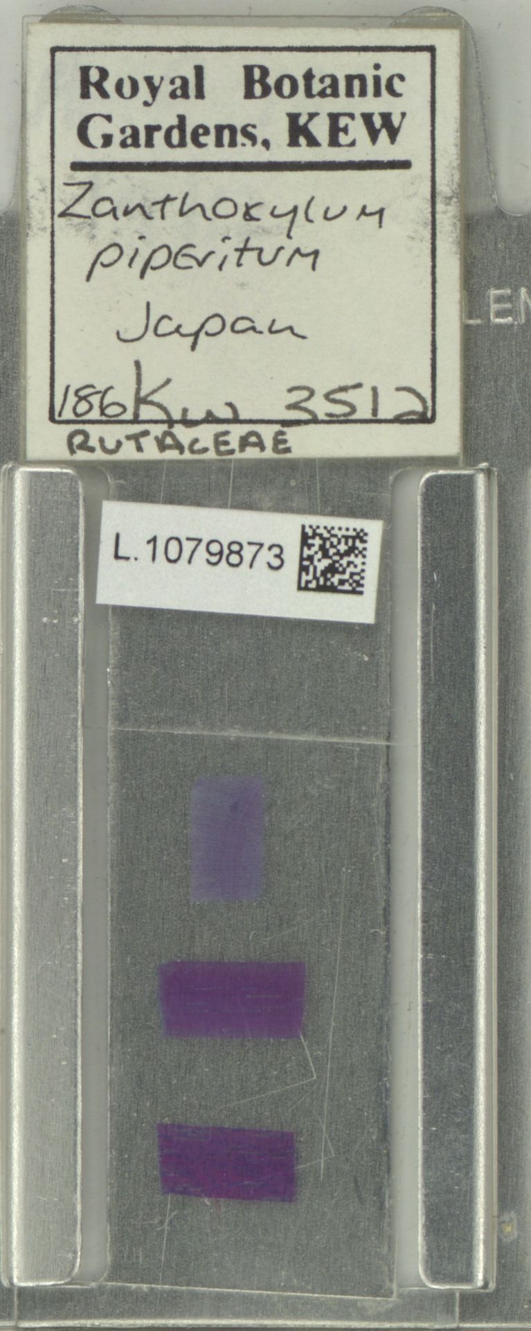 L.1079873 | Zanthoxylum piperitum DC.