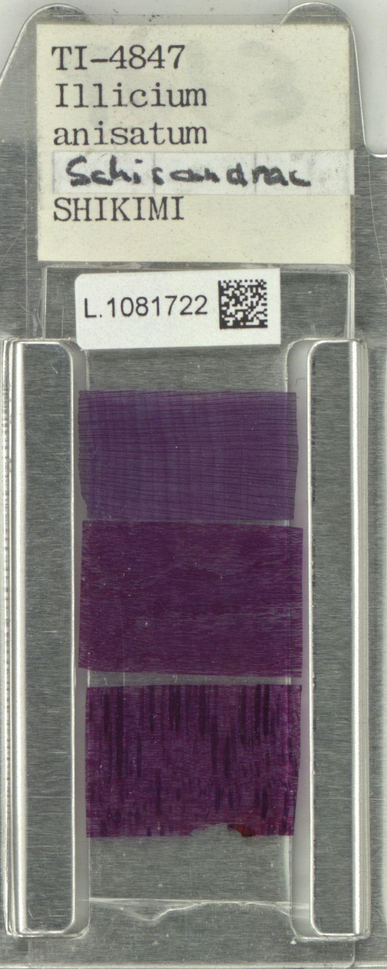 L.1081722 | Illicium anisatum L.