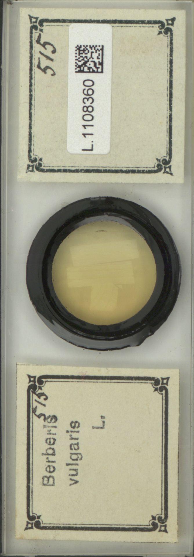 L.1108360 | Berberis vulgaris L.