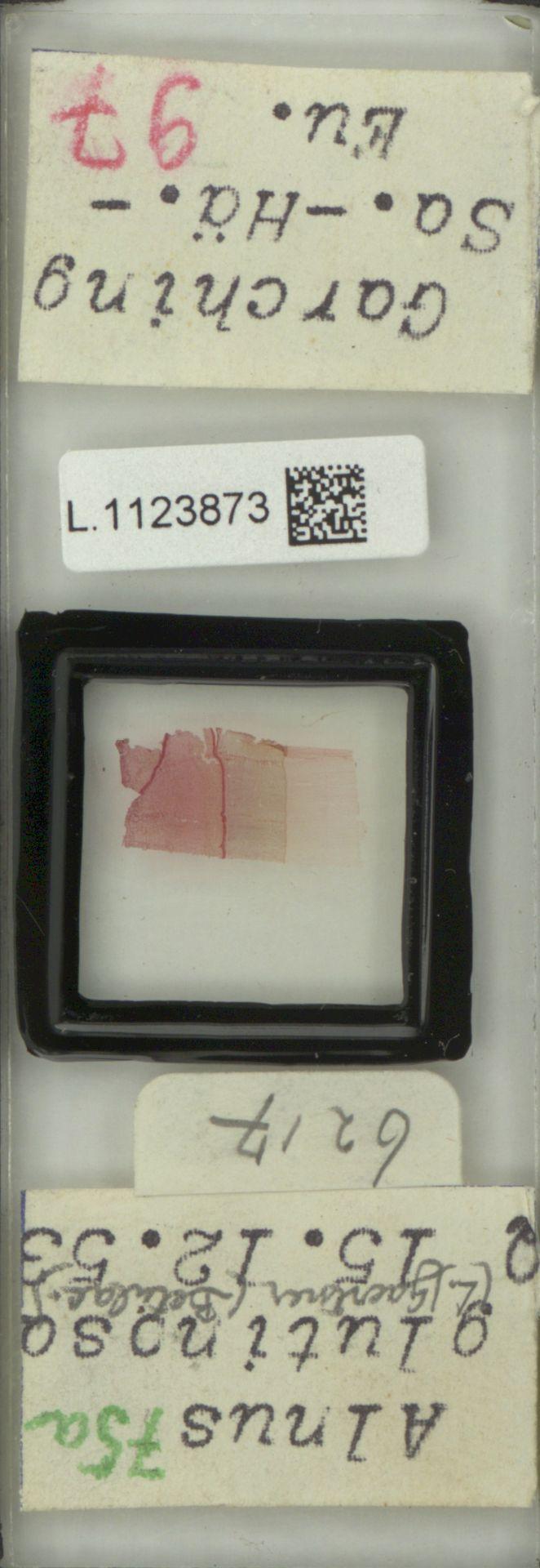 L.1123873 | Alnus glutinosa (L.) Gaertn.