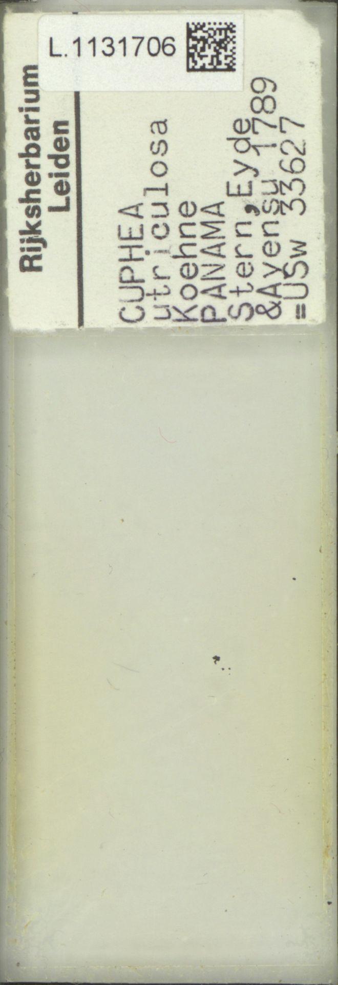 L.1131706 | Cuphea utriculosa Koehne