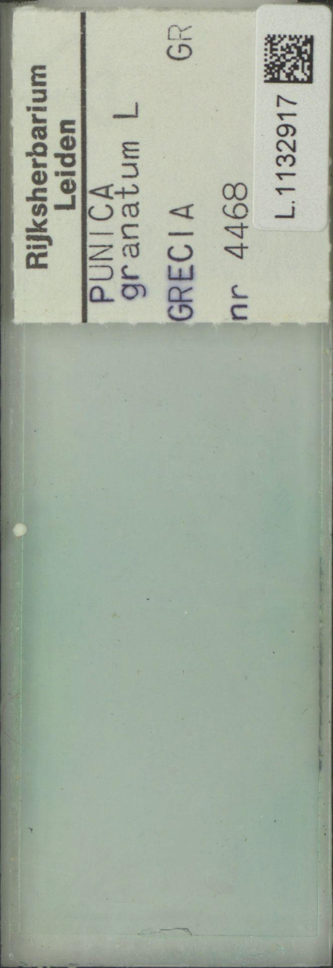 L.1132917 | Punica granatum L.