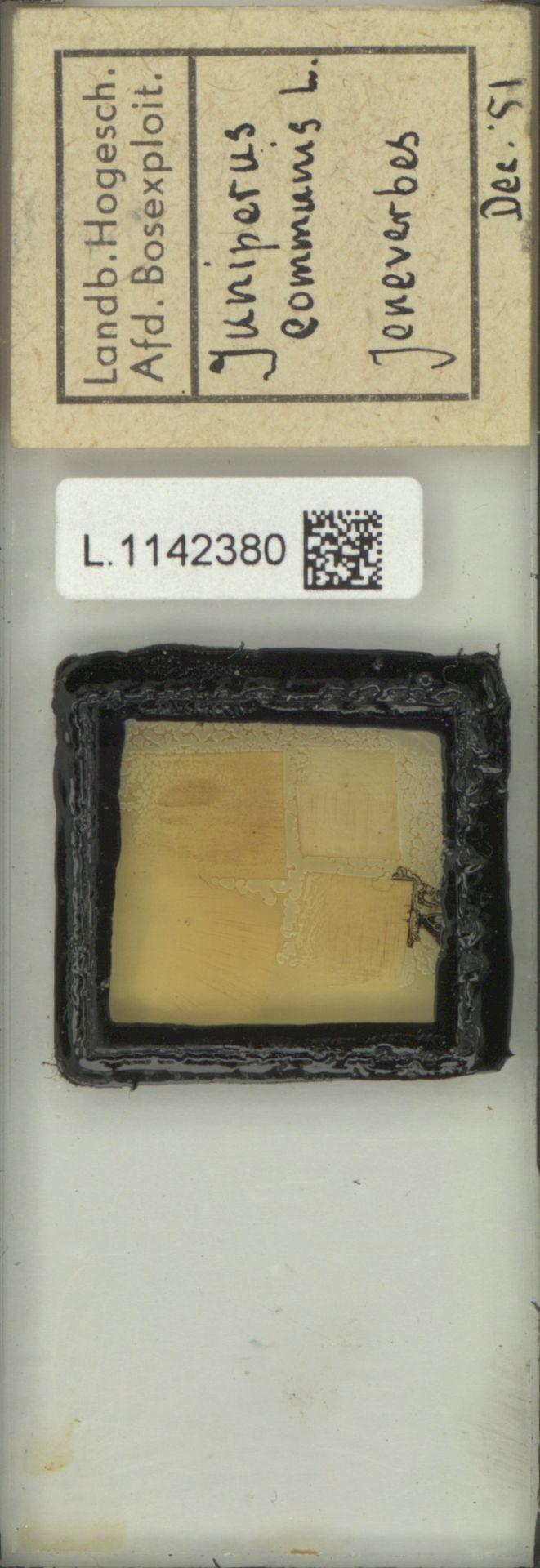 L.1142380 | Juniperus communis L.
