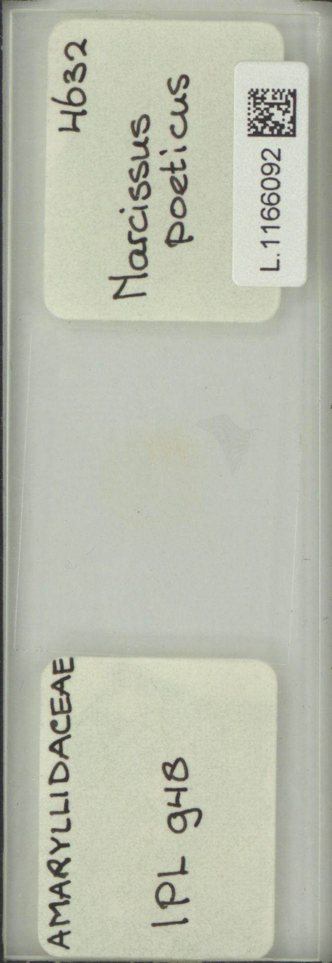L.1166092   Narcissus poeticus L.