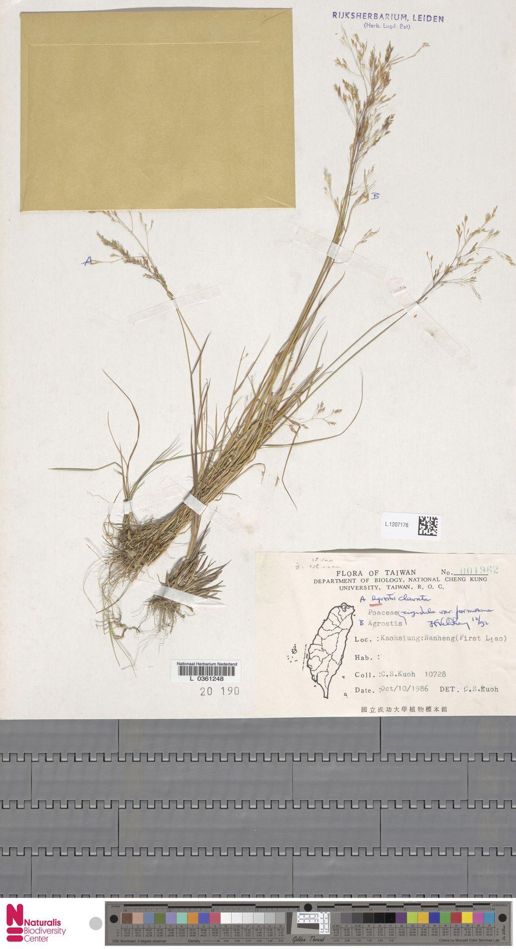L.1207176 | Agrostis clavata Trin.