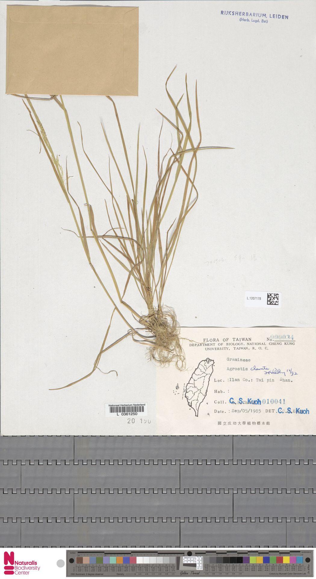 L.1207178 | Agrostis clavata Trin.