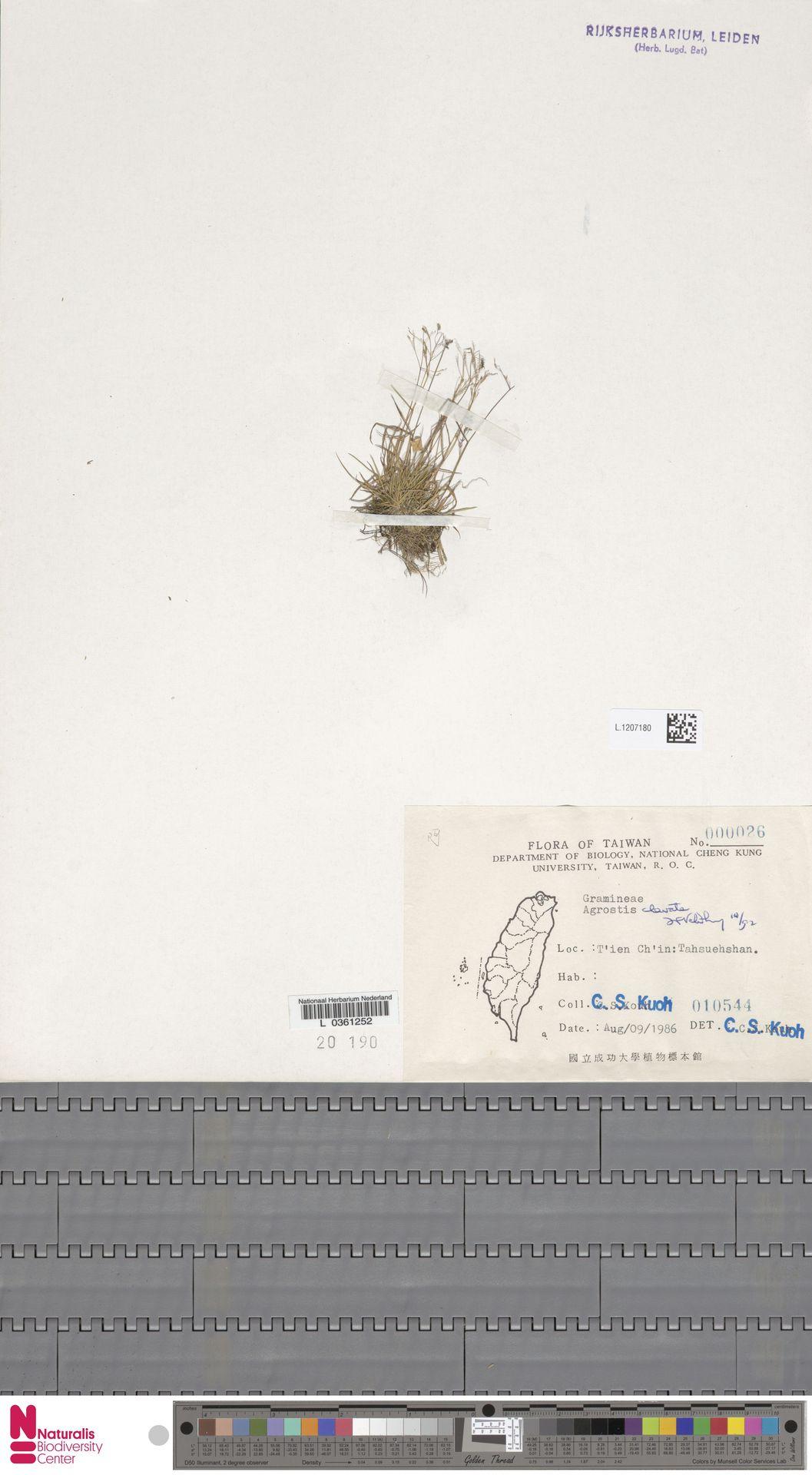 L.1207180 | Agrostis clavata Trin.