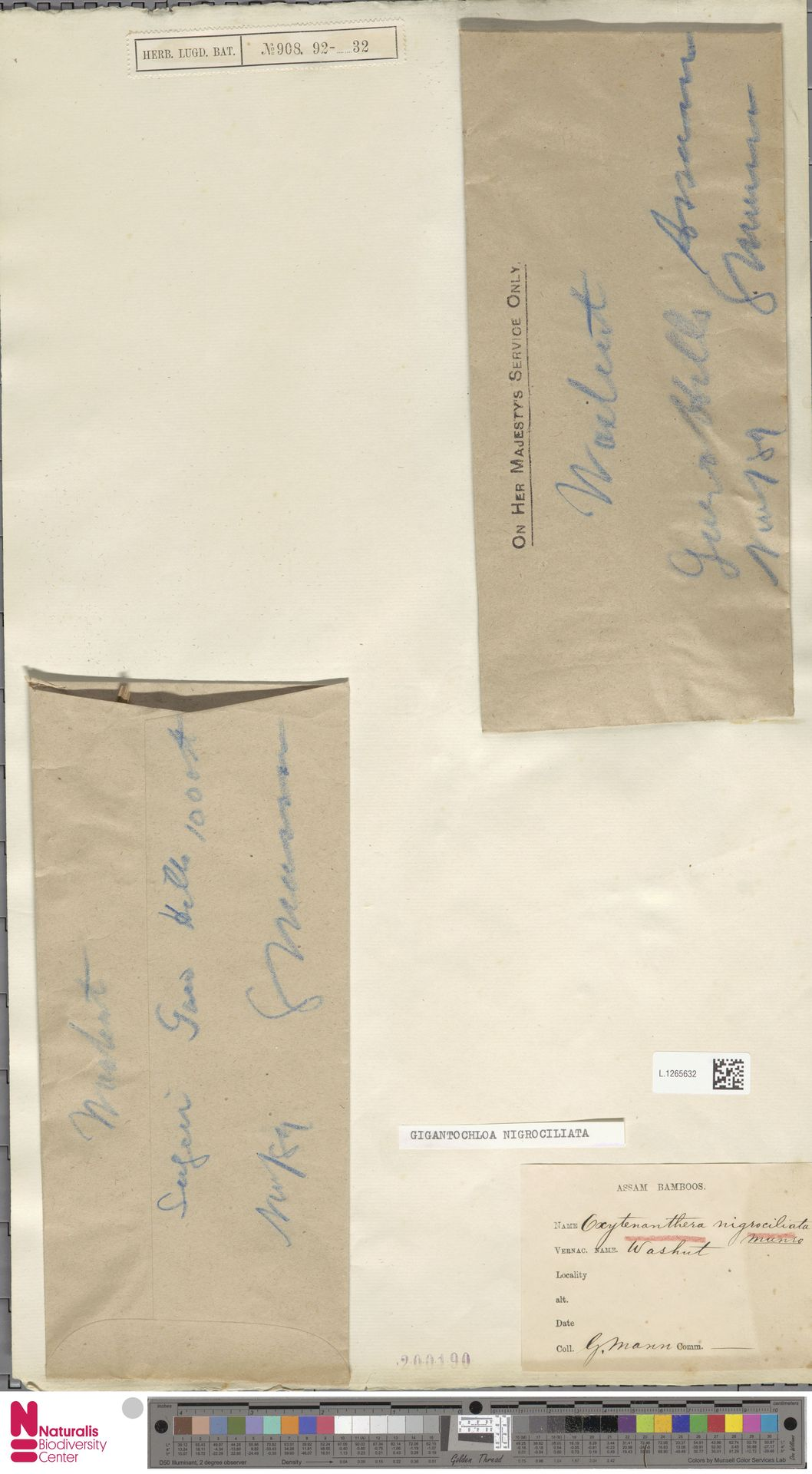 L.1265632 | Gigantochloa nigrociliata Kurz
