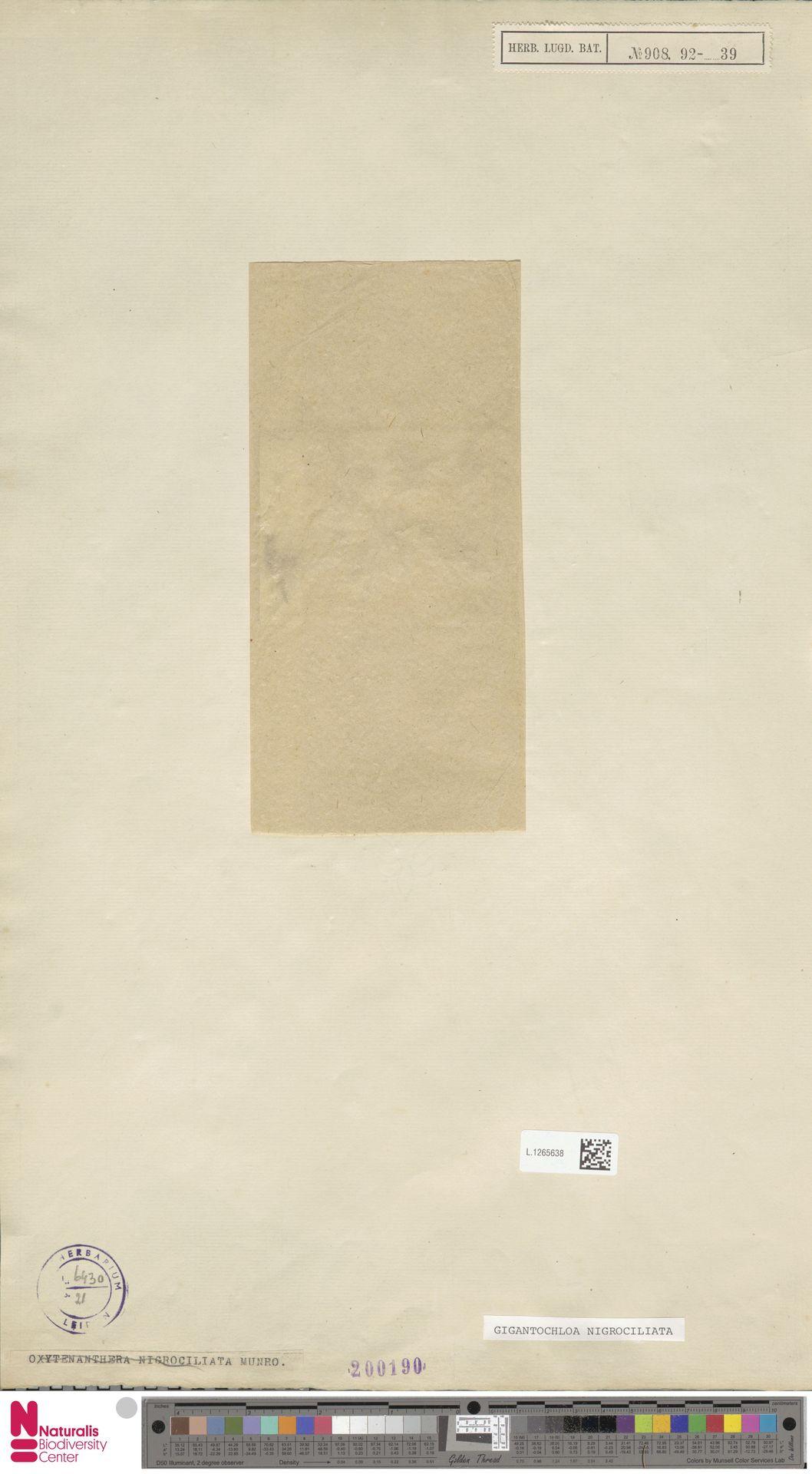 L.1265638 | Gigantochloa nigrociliata Kurz