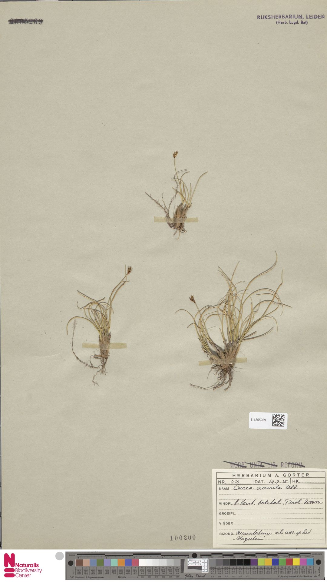 L.1355269 | Carex curvula All.