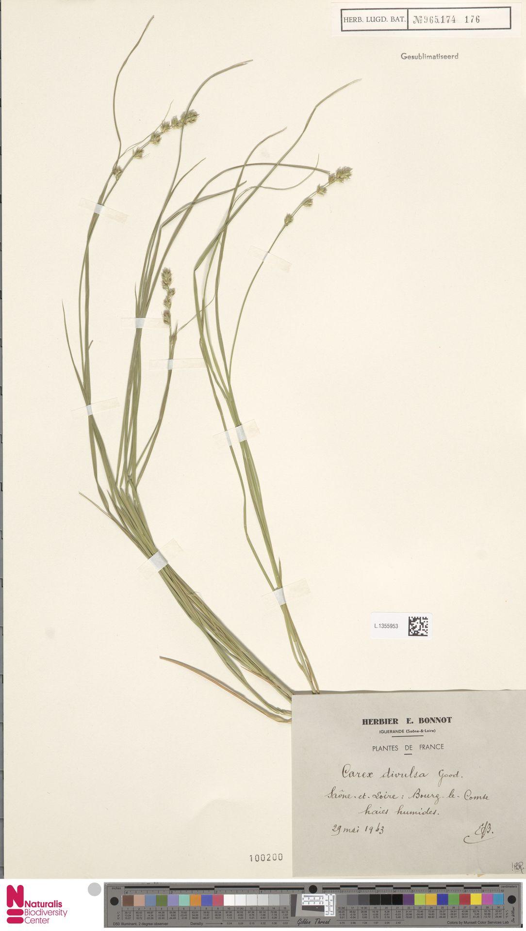 L.1355953 | Carex divulsa Stokes