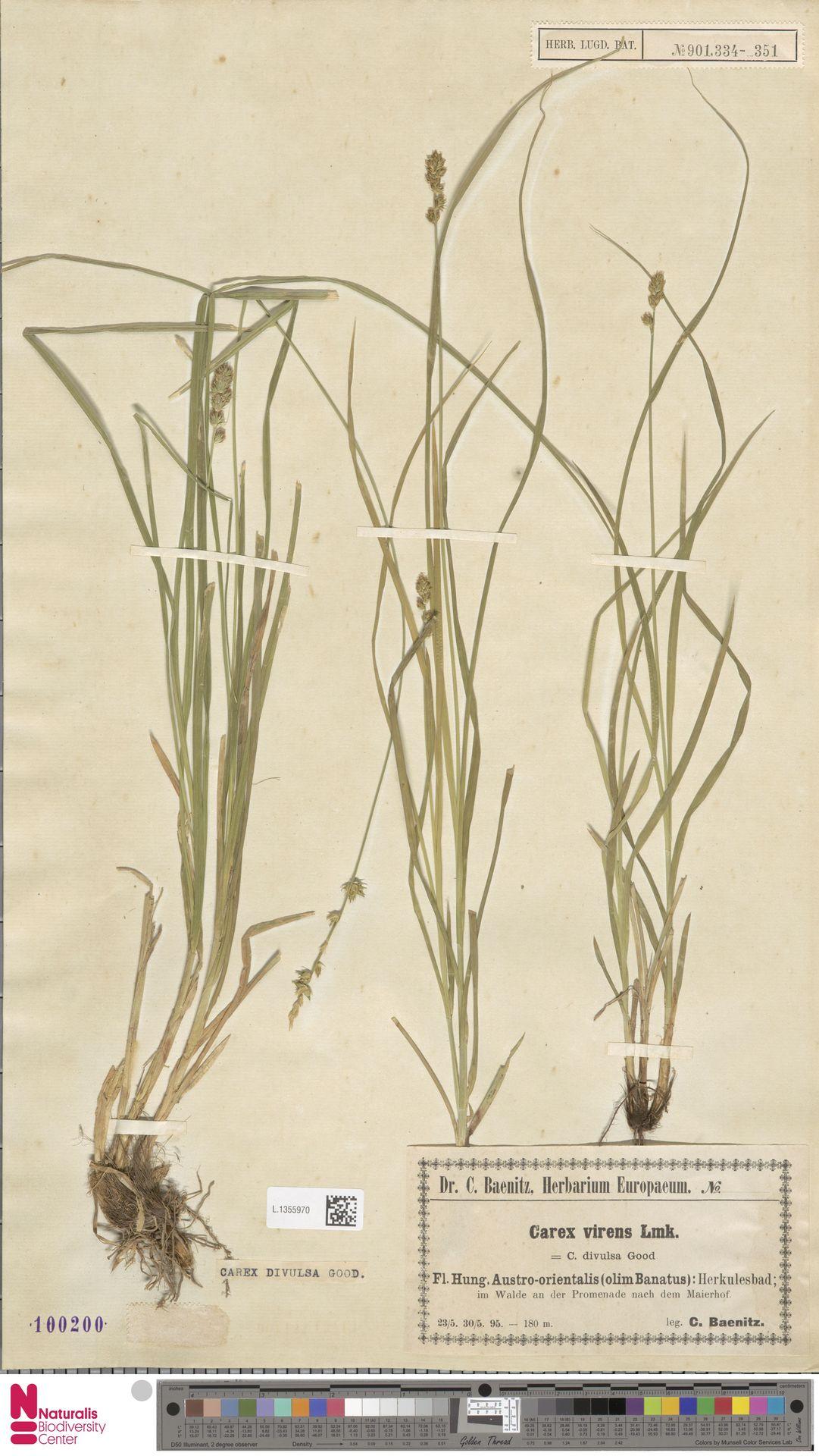 L.1355970 | Carex divulsa Stokes