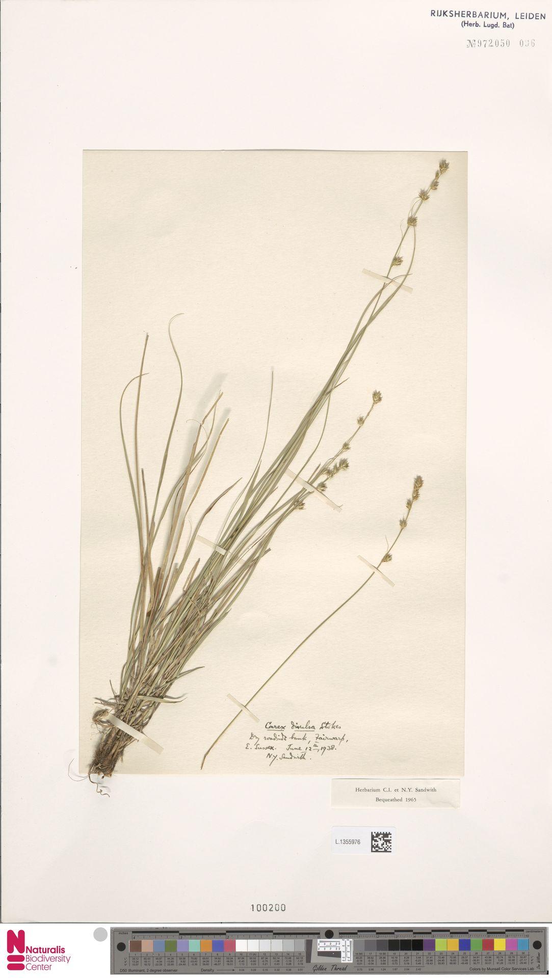 L.1355976 | Carex divulsa Stokes