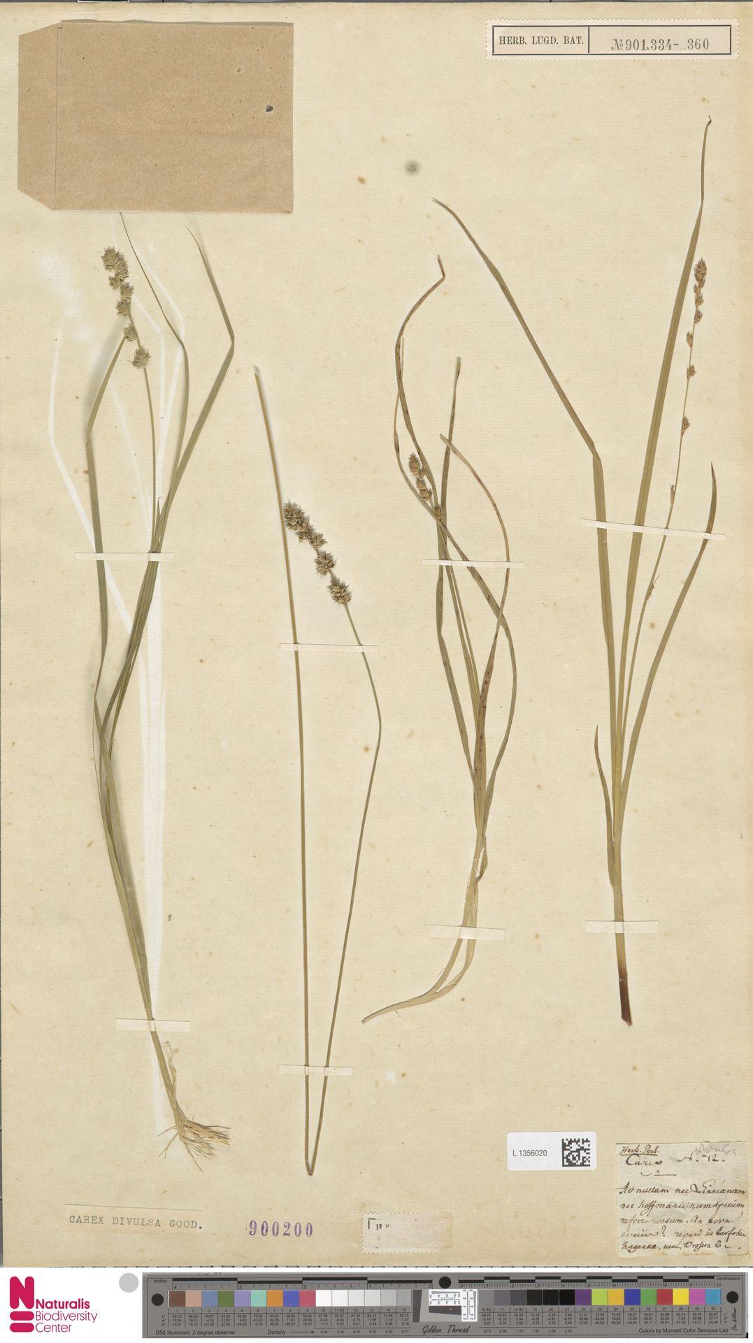 L.1356020 | Carex divulsa Stokes