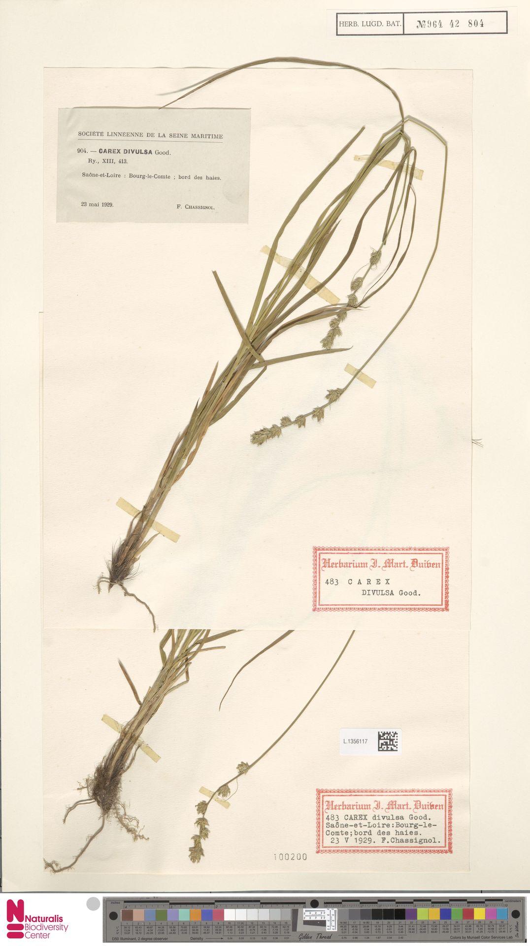 L.1356117 | Carex divulsa Stokes