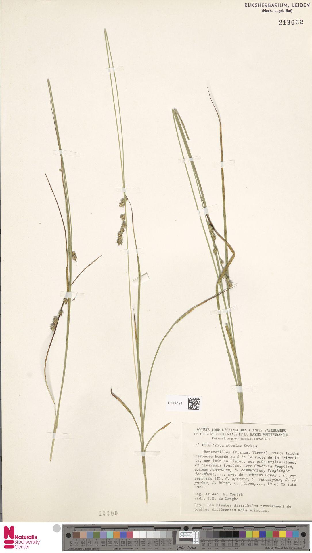 L.1356128 | Carex divulsa Stokes