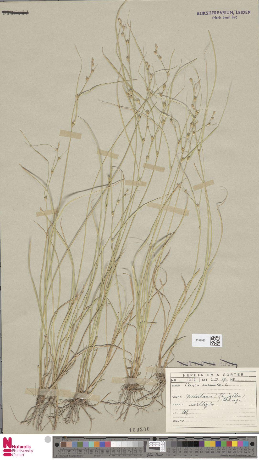 L.1359997 | Carex remota L.