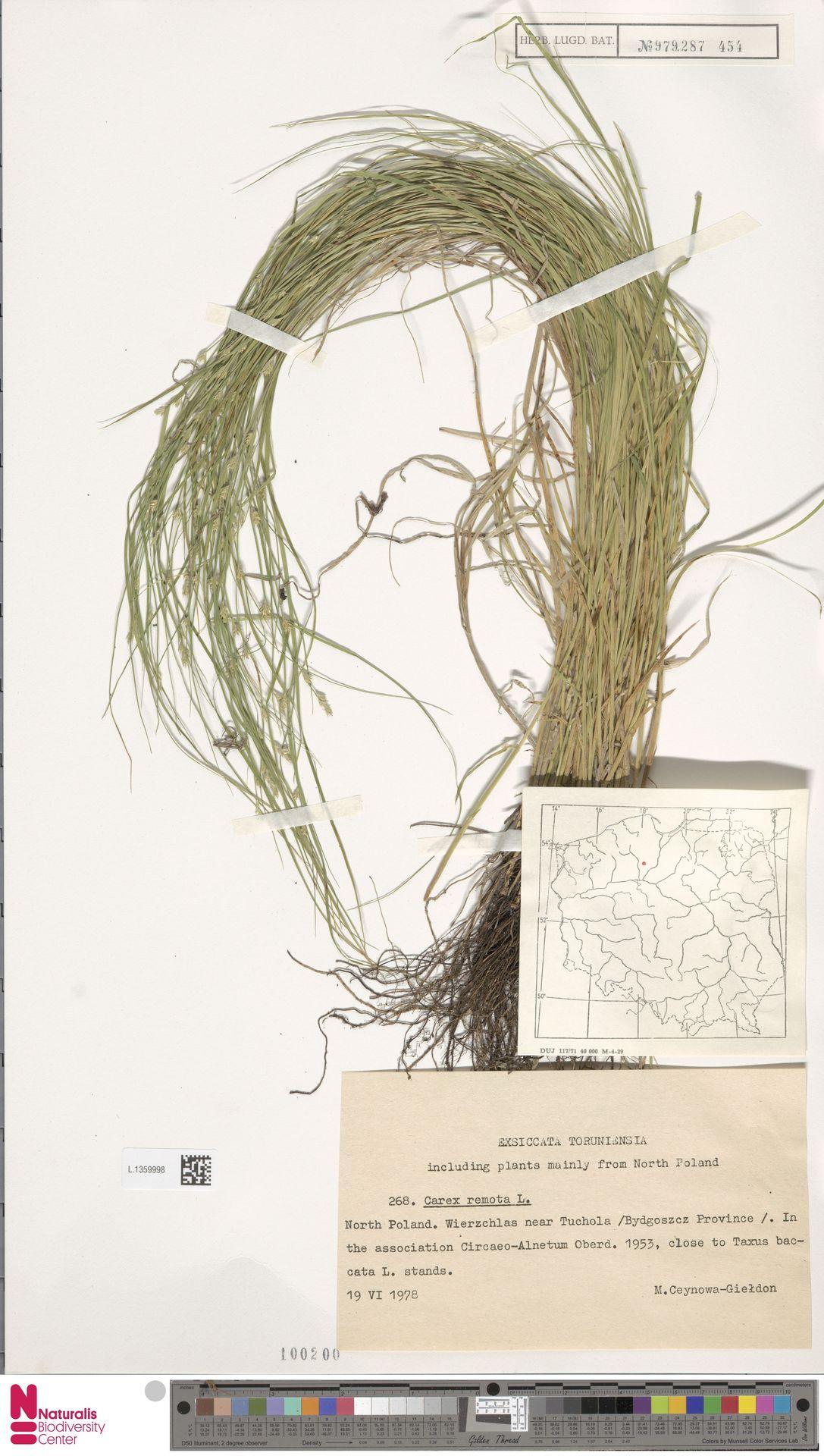 L.1359998 | Carex remota L.
