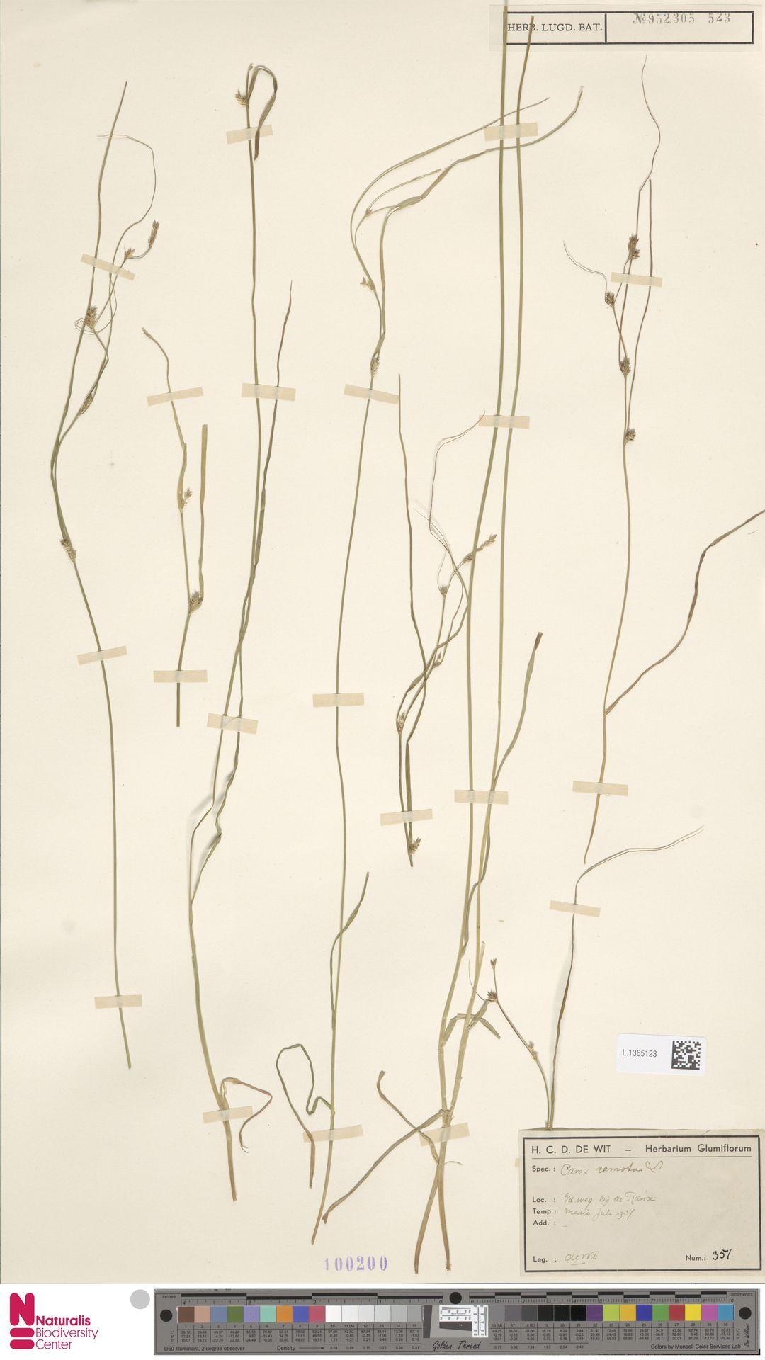 L.1365123 | Carex remota L.