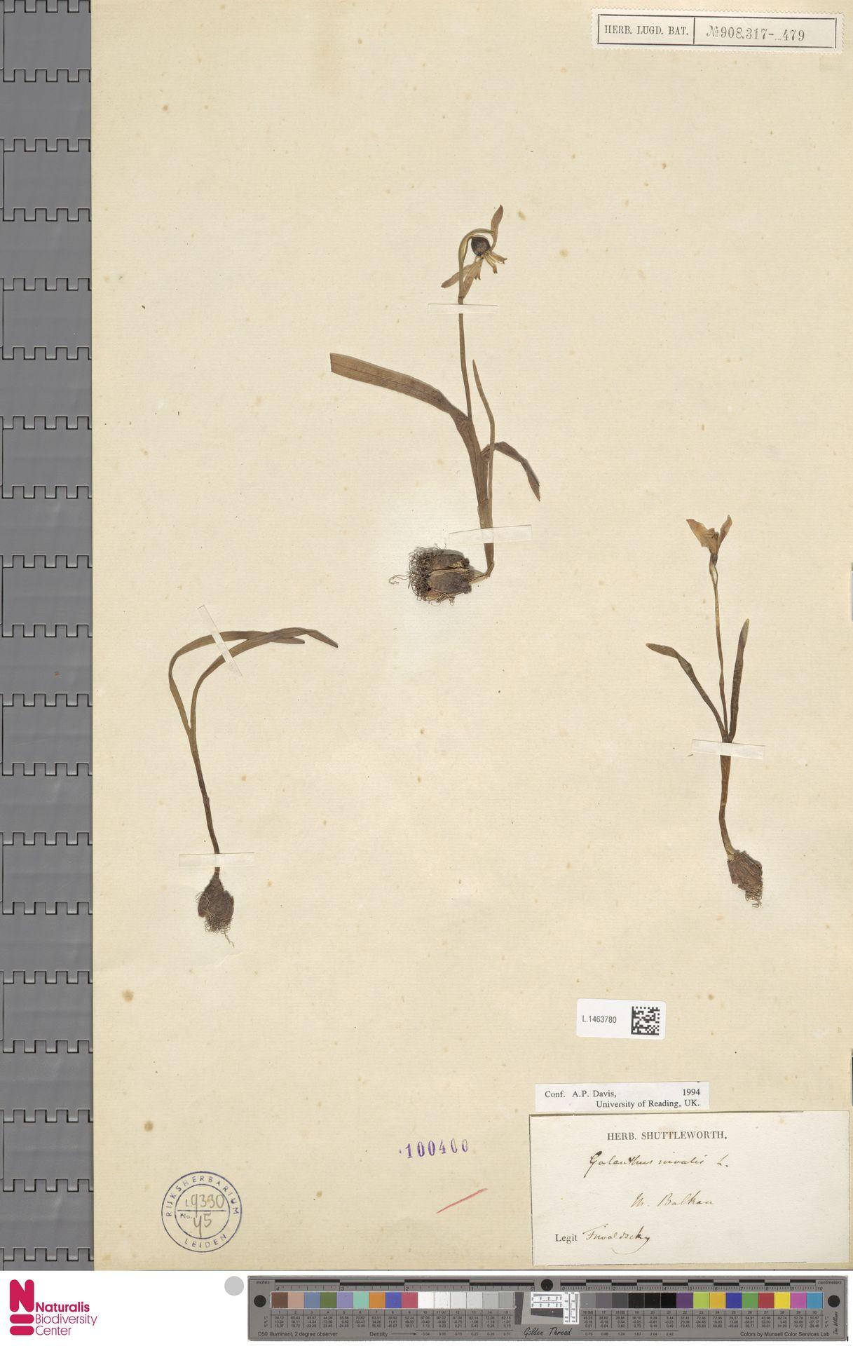 L.1463780 | Galanthus nivalis L.