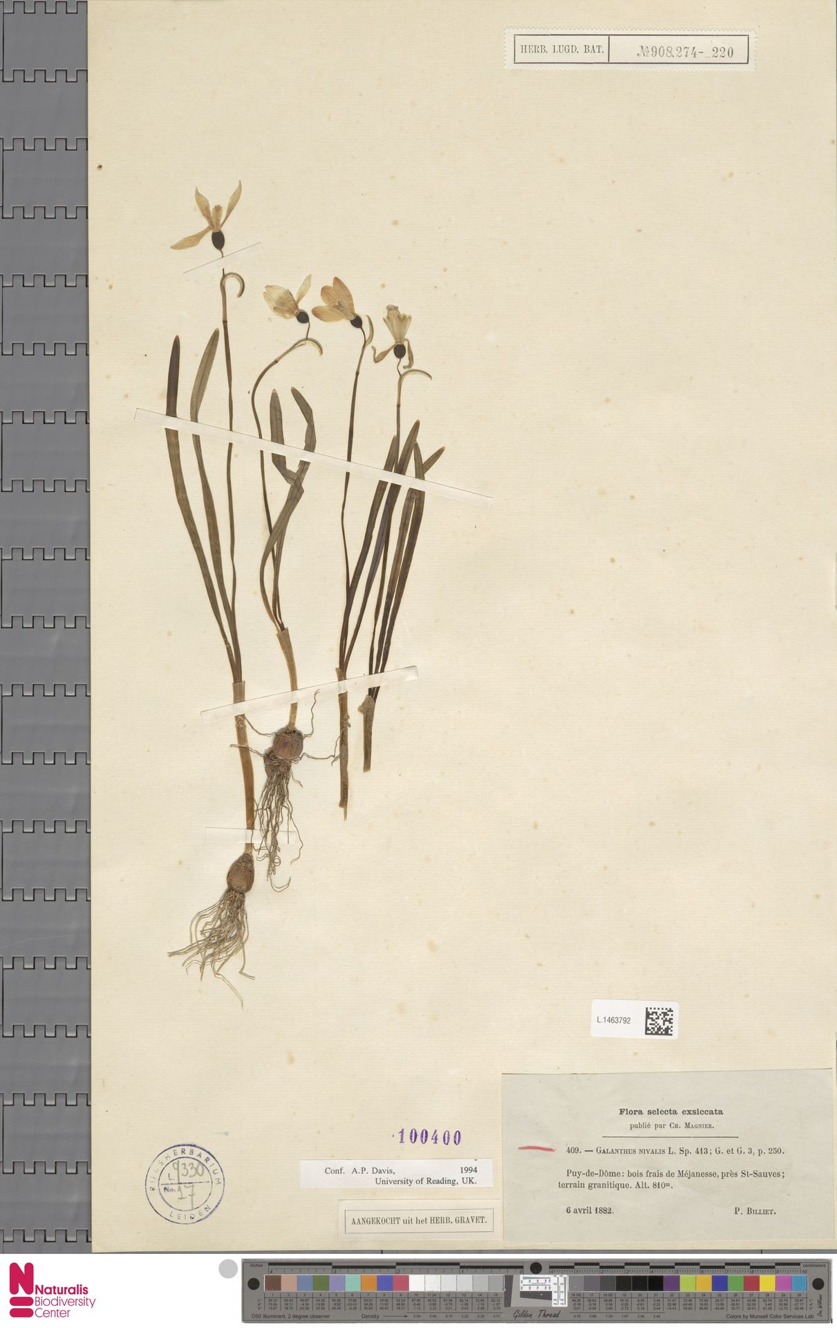 L.1463792 | Galanthus nivalis L.