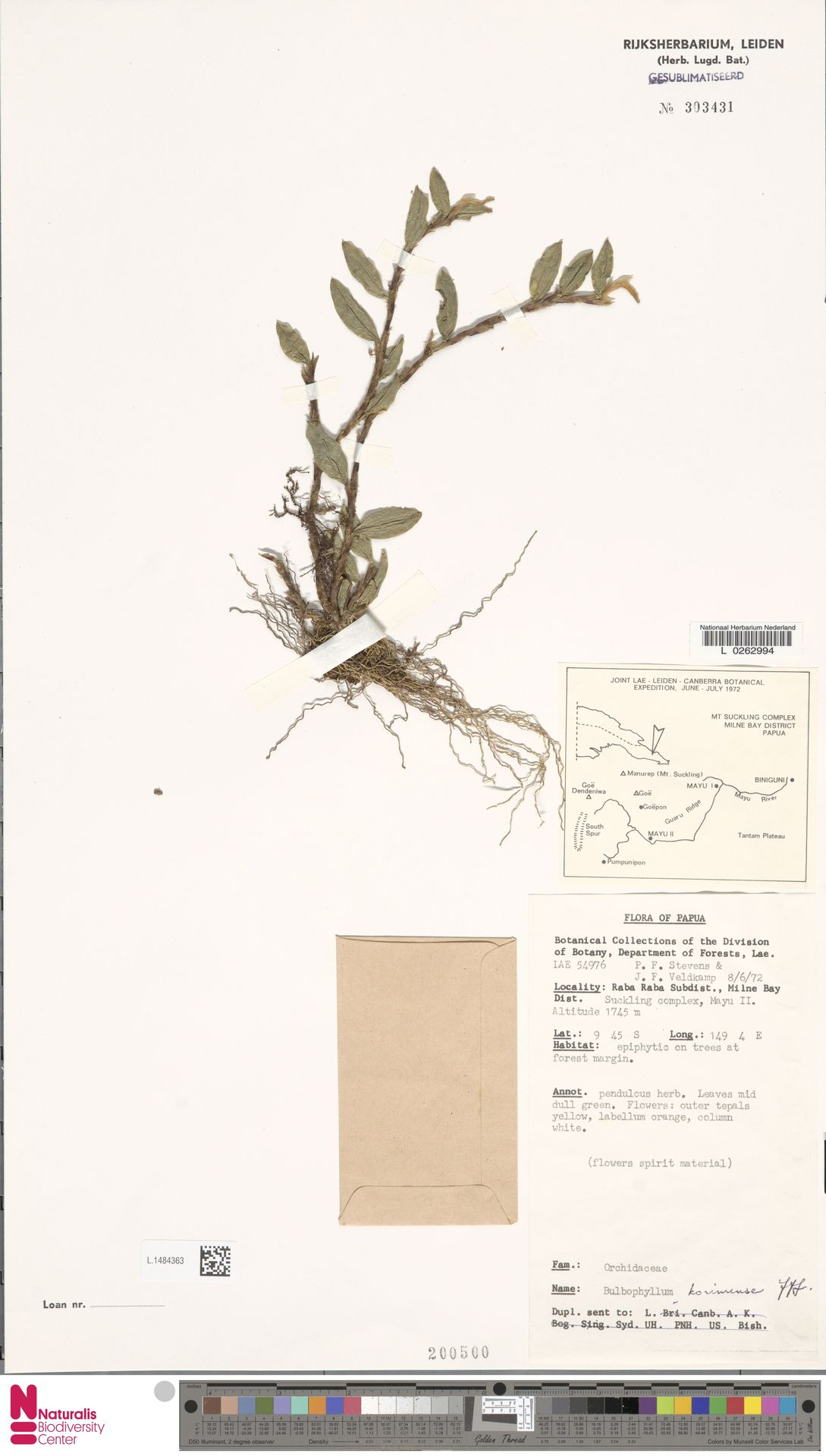 L.1484363 | Bulbophyllum korimense J.J.Sm.