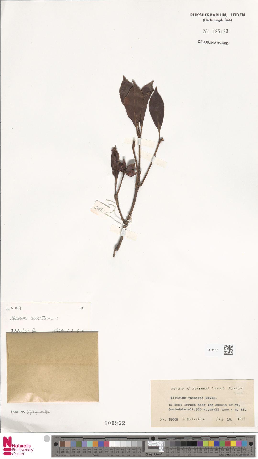 L.1741721   Illicium anisatum L.