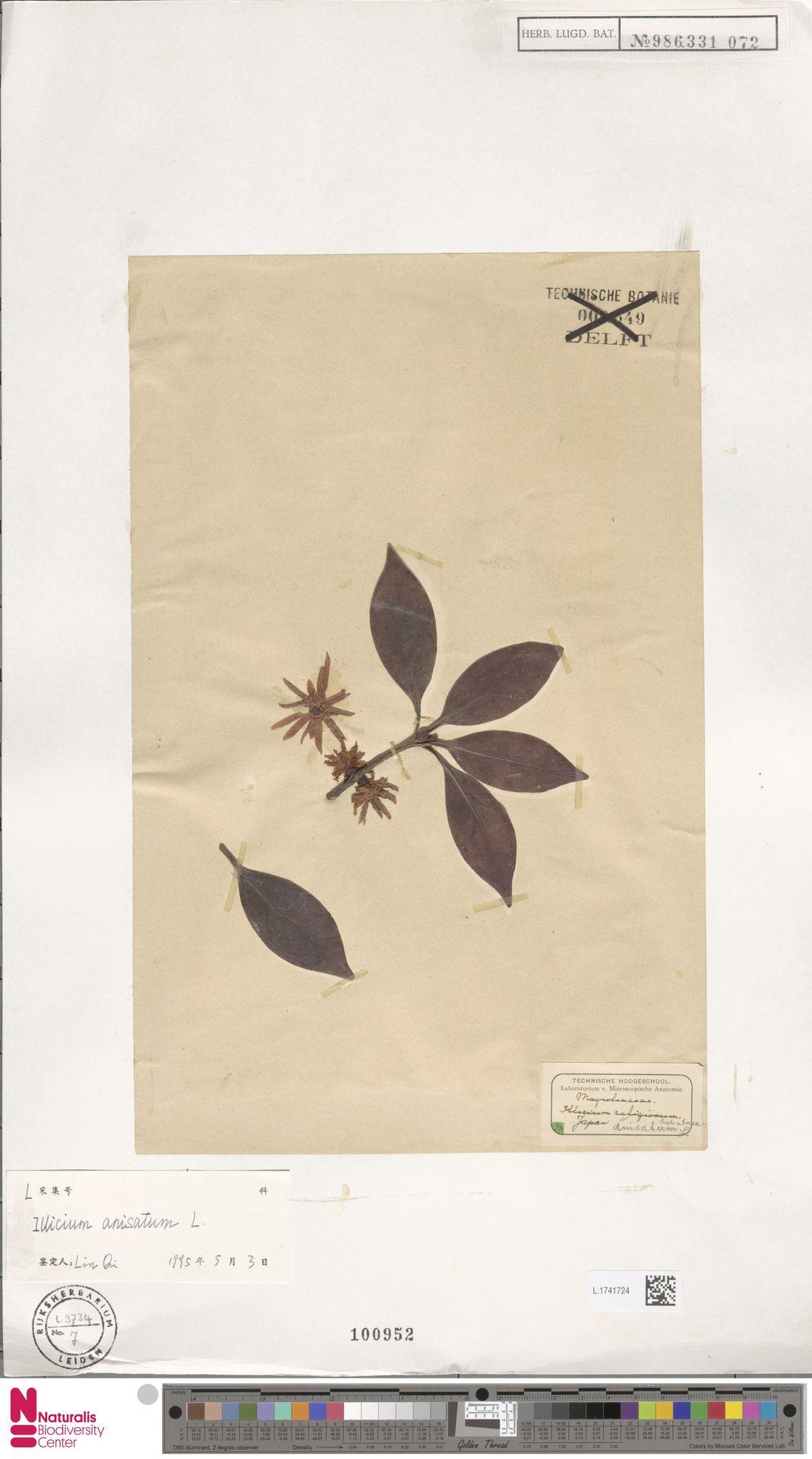 L.1741724 | Illicium anisatum L.