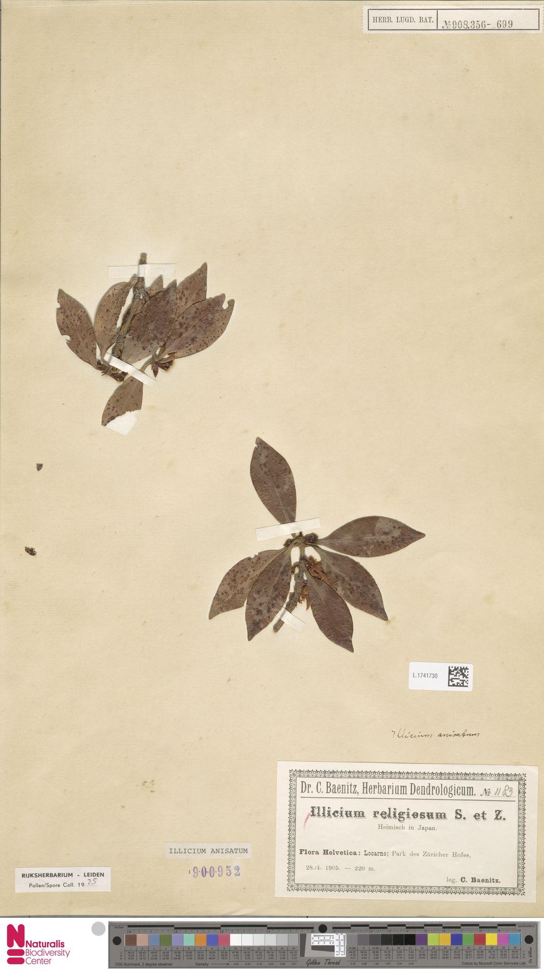 L.1741730 | Illicium anisatum L.
