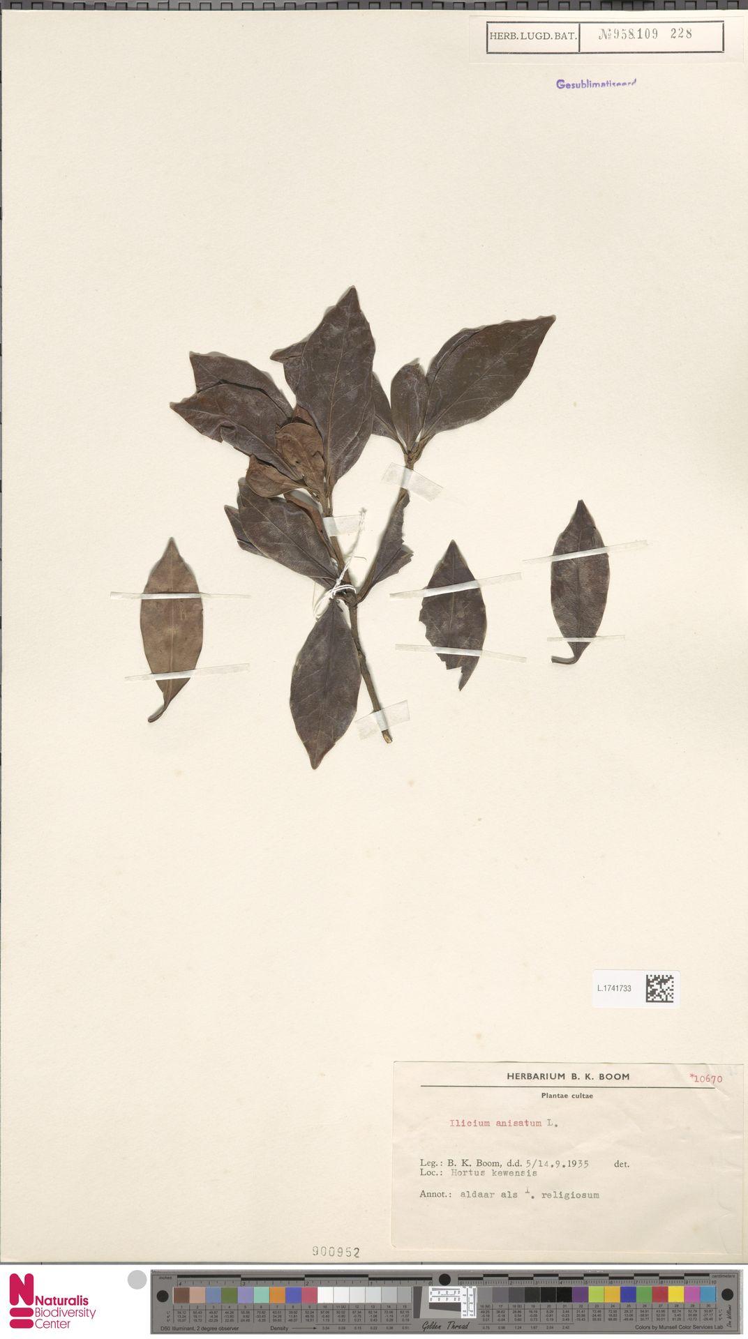 L.1741733 | Illicium anisatum L.