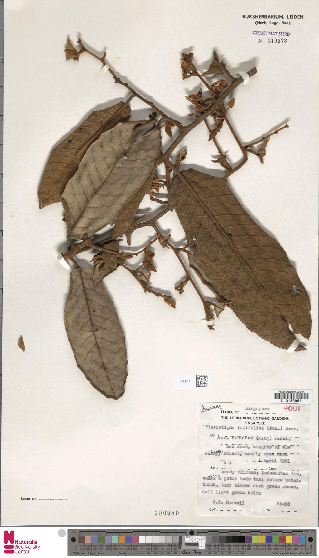 L.1754433   Fissistigma latifolium var. ovoideum (King) J.Sinclair