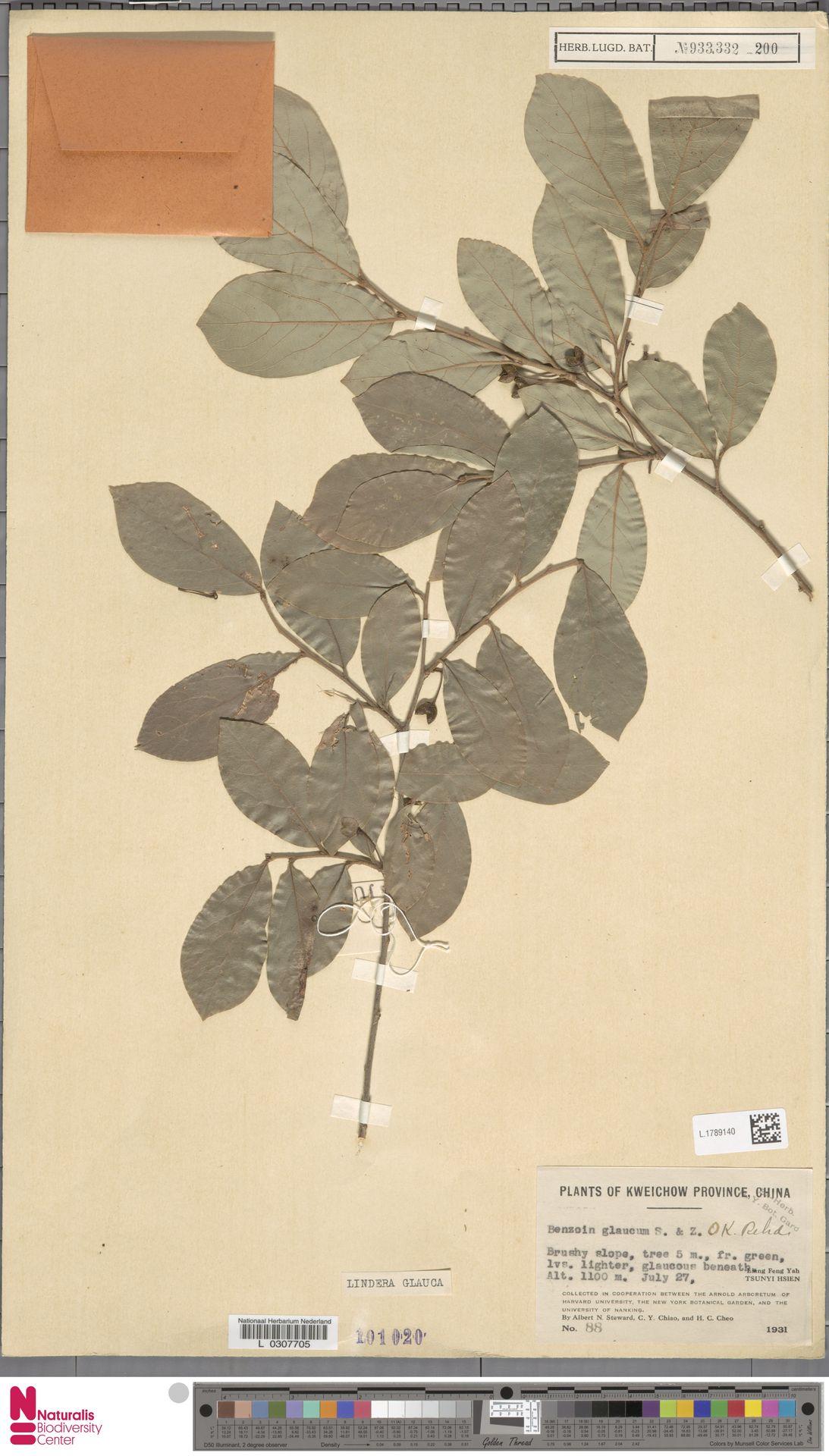 L.1789140 | Lindera glauca Blume