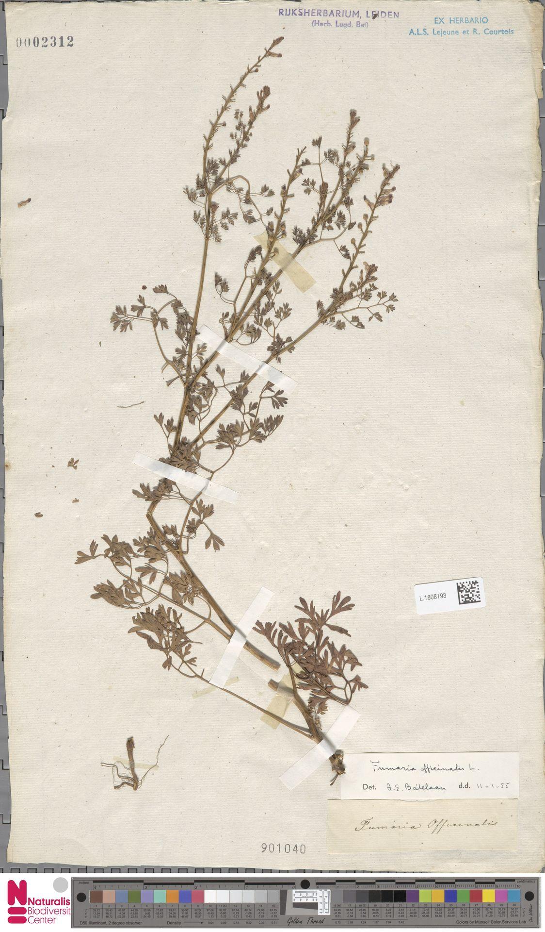 L.1808193 | Fumaria officinalis L.
