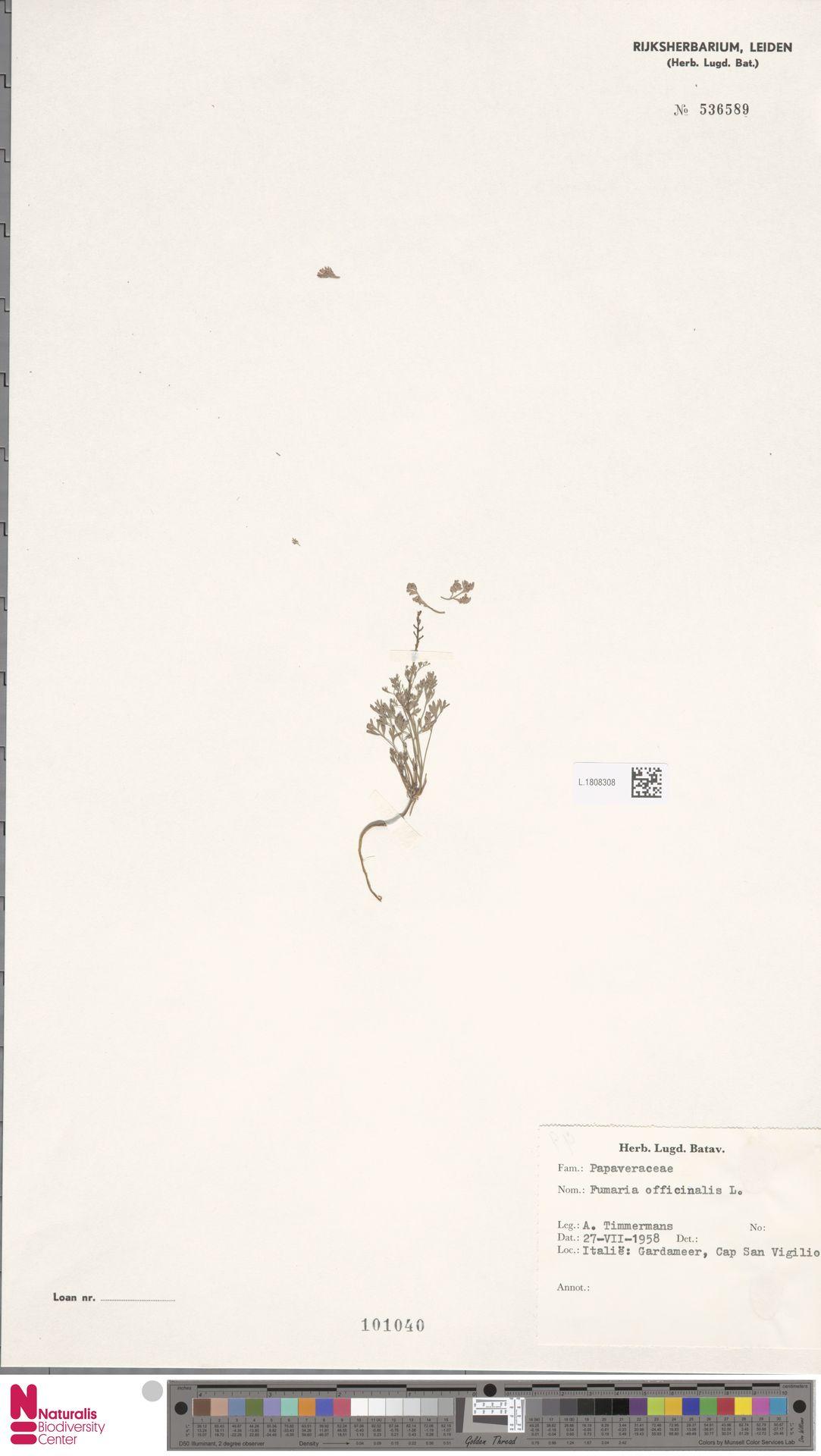L.1808308 | Fumaria officinalis L.