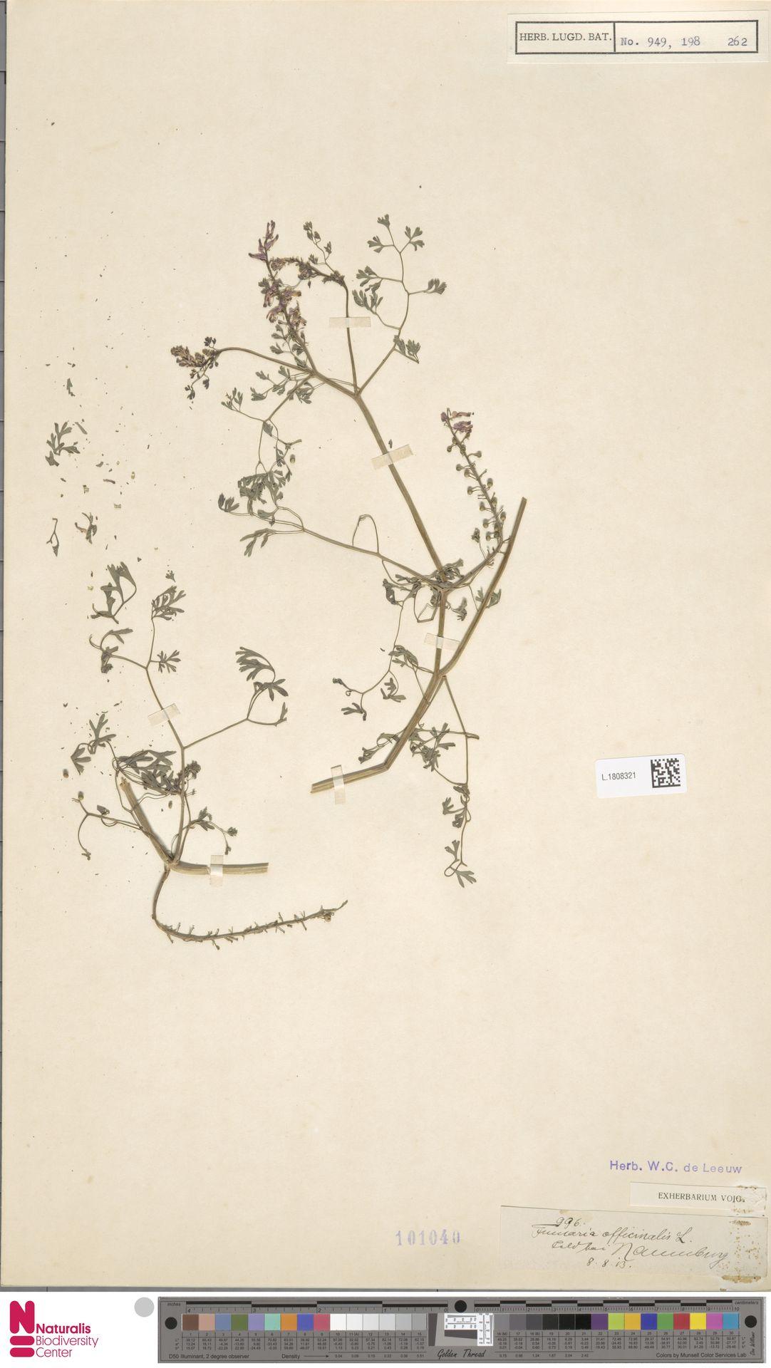 L.1808321 | Fumaria officinalis L.