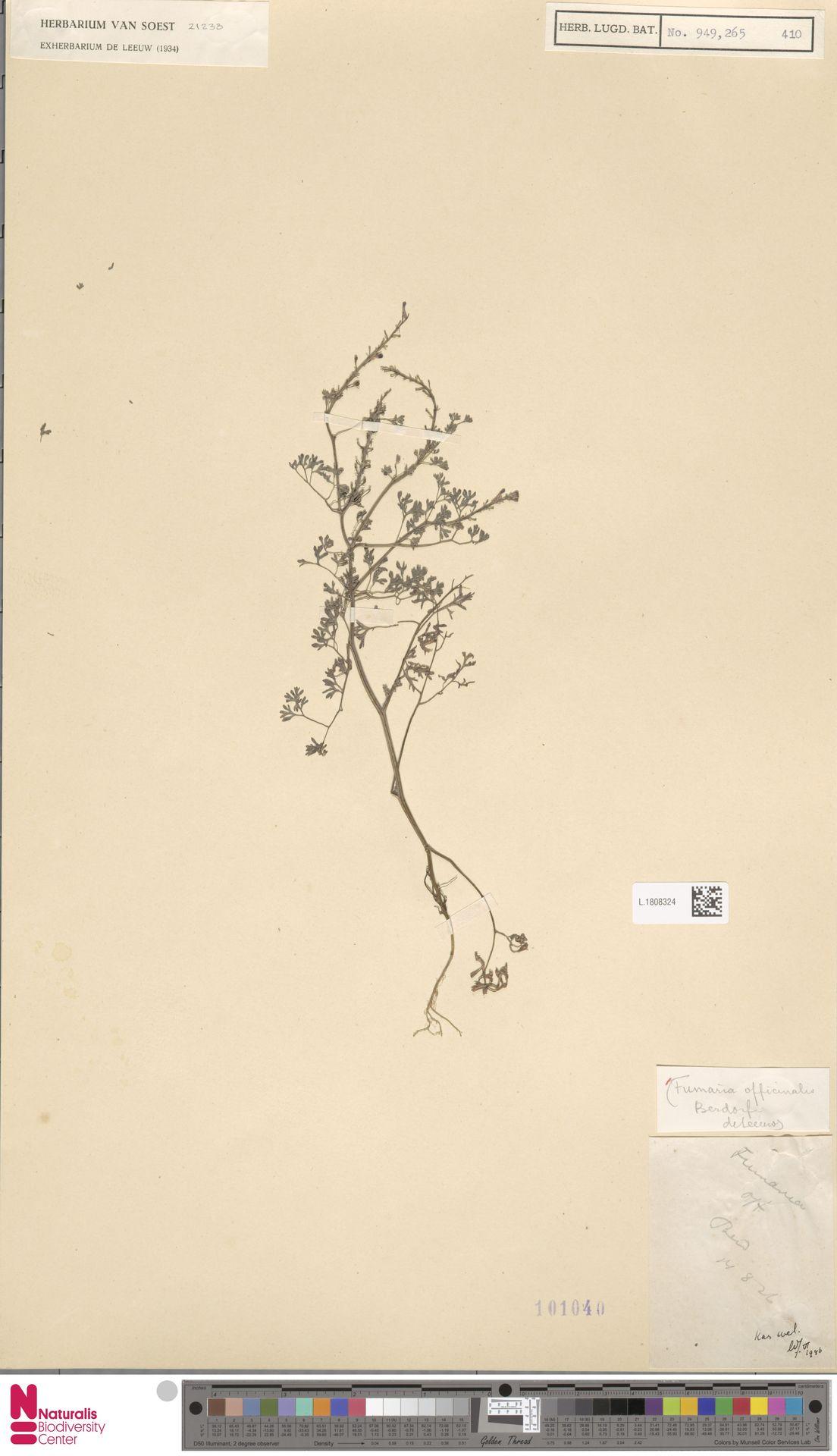 L.1808324 | Fumaria officinalis L.