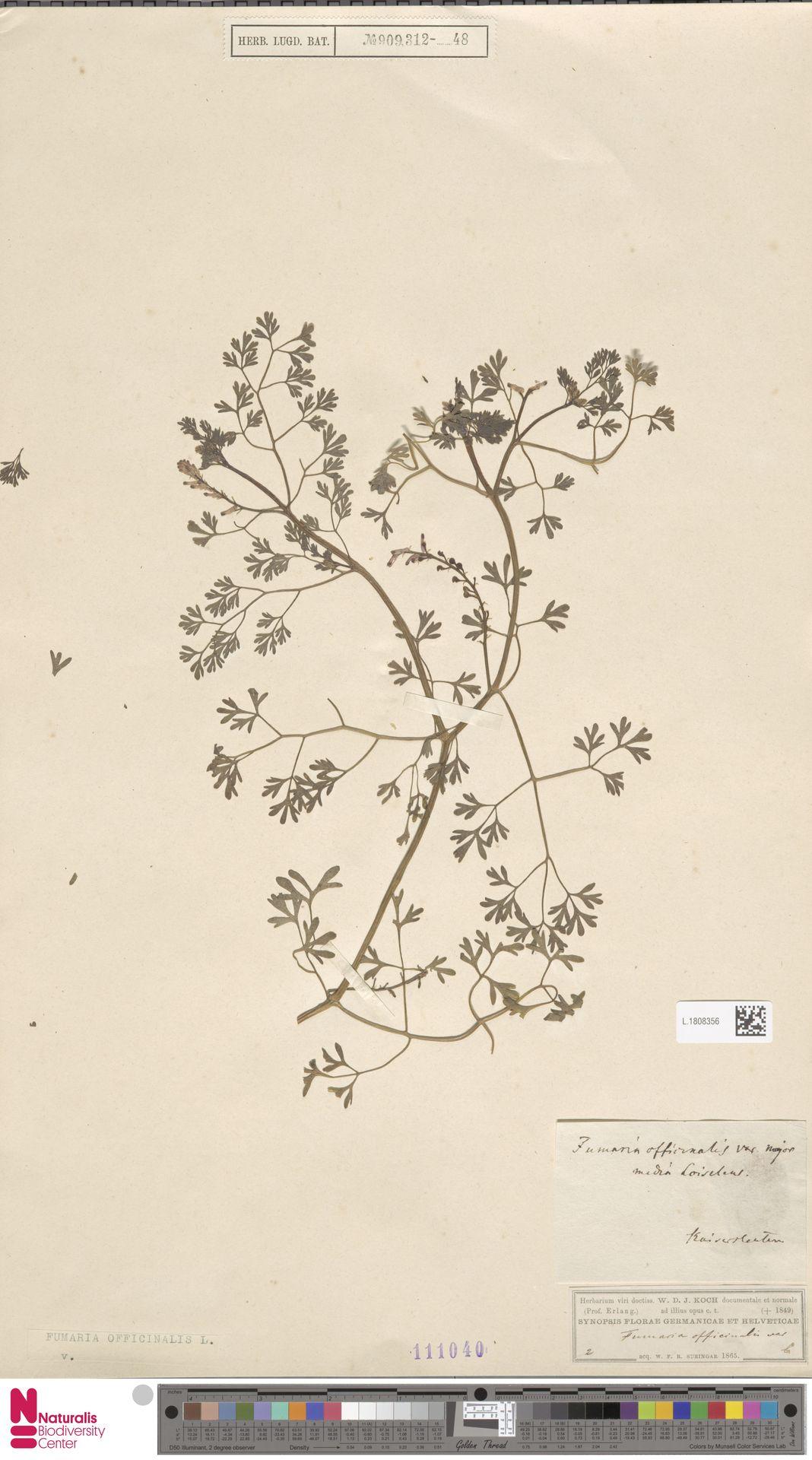 L.1808356 | Fumaria officinalis L.