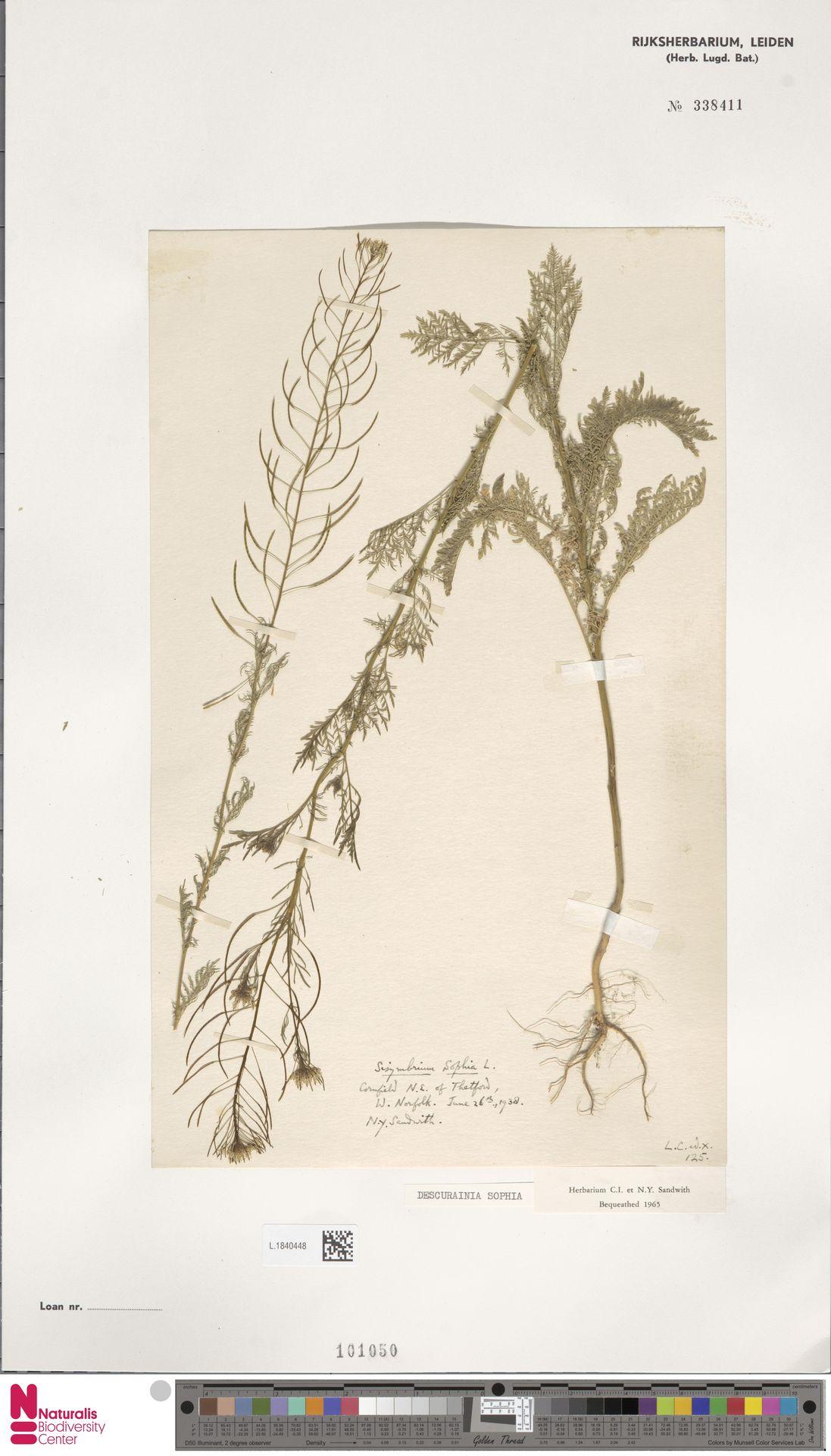 L.1840448 | Descurainia sophia (L.) Webb ex Prantl