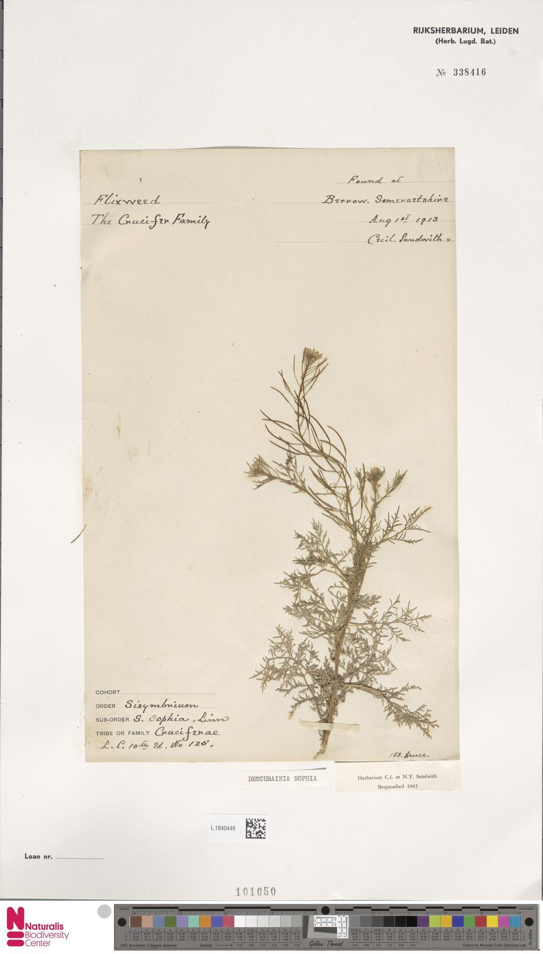 L.1840449 | Descurainia sophia (L.) Webb ex Prantl
