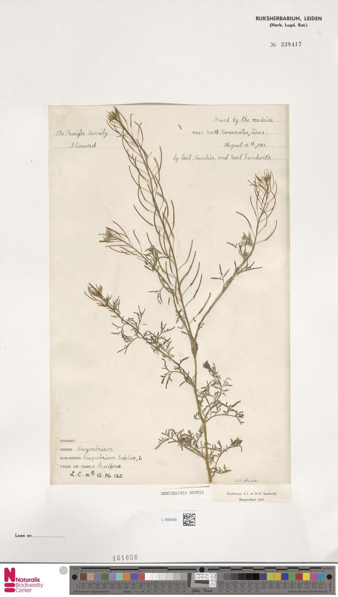 L.1840450 | Descurainia sophia (L.) Webb ex Prantl